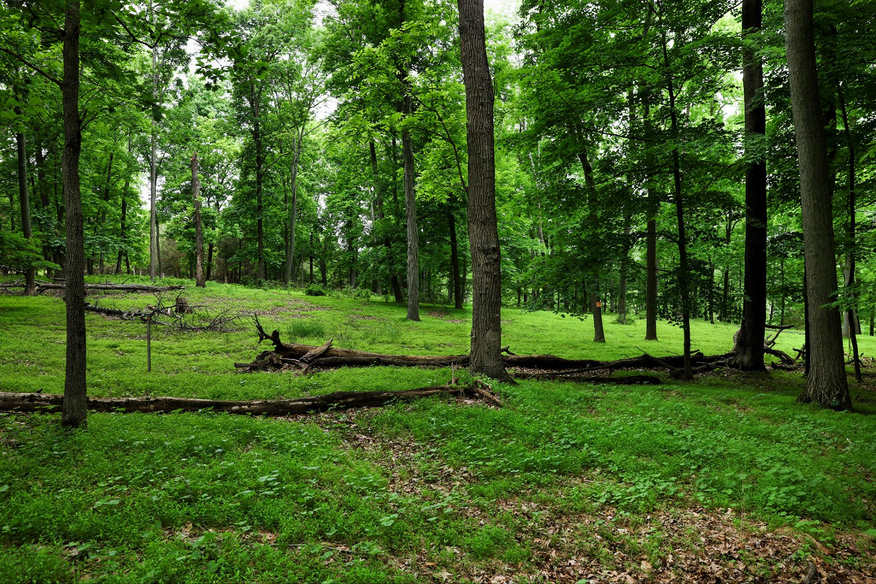Land for Sale at Imagine the Possibilites 223 Sandy Ridge Mount Airy Road, Stockton, New Jersey 08559 United States