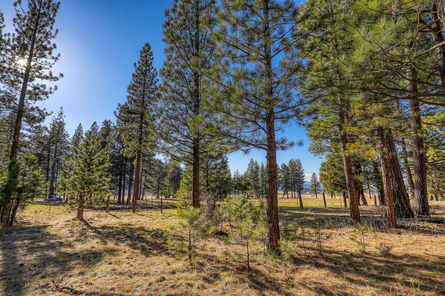 Land for Sale at 709 Redtail Loop Clio California 96106 709 Redtail Loop Clio, California 96106 United States