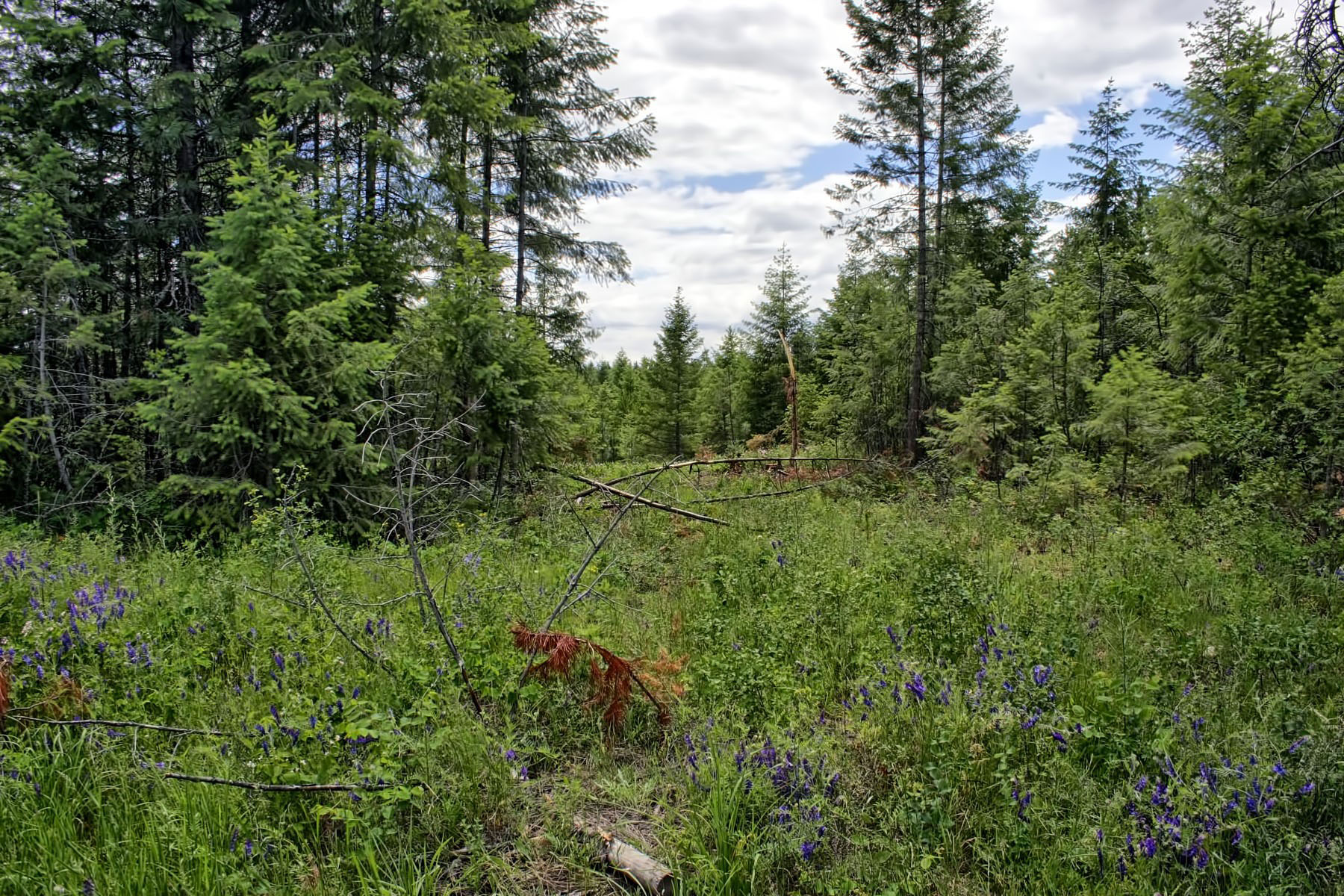 Terreno para Venda às Large acreage with timber Lot B7 Northern Sky Rd, Athol, Idaho, 83801 Estados Unidos