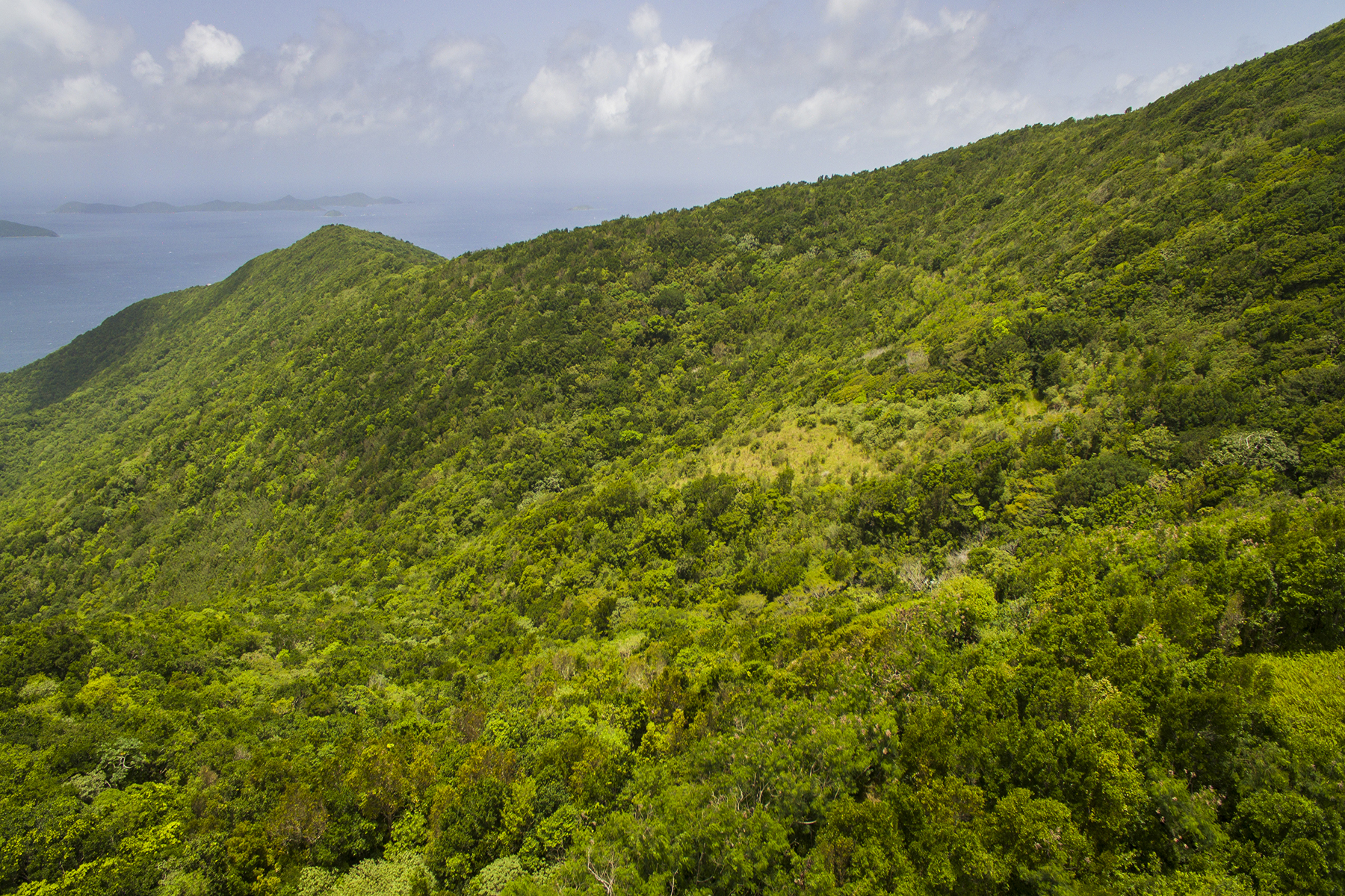 Additional photo for property listing at Sage Land Sage Mountain, Tortola British Virgin Islands