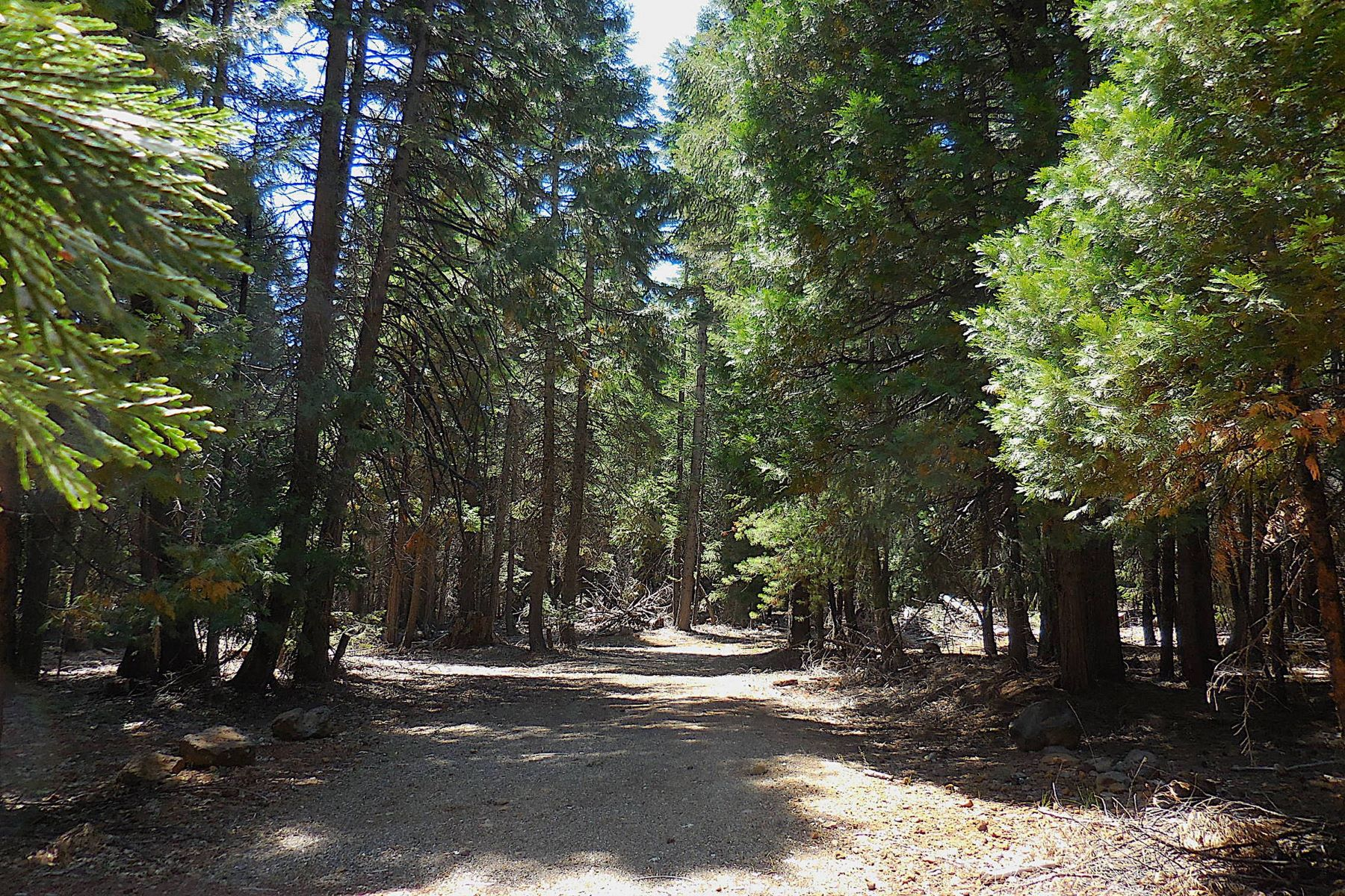 Land for Sale at Private 2 Acre Parcel in the Forest Lot 61 Pony Express Shingletown, California 96088 United States