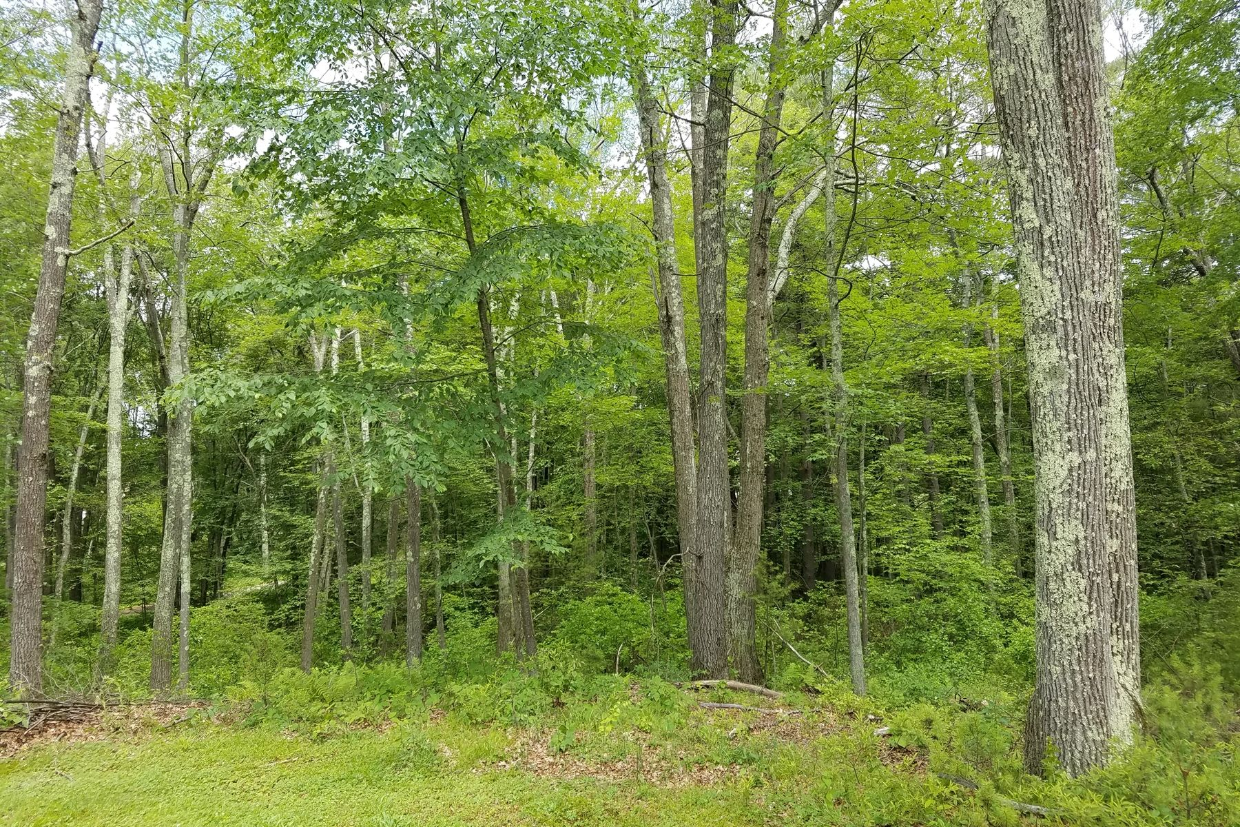 Land for Sale at Beautiful Wooded Lot 0-1 Yew Street Douglas, Massachusetts 01516 United States