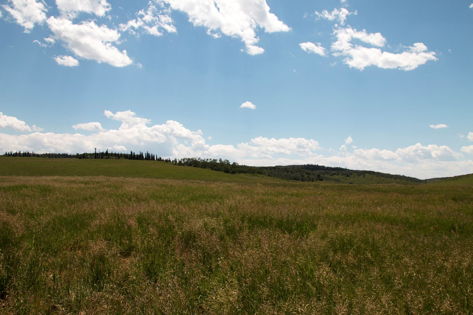 Additional photo for property listing at 139+ Acre Homesite TBD RCR 43 Steamboat Springs, Colorado 80487 United States