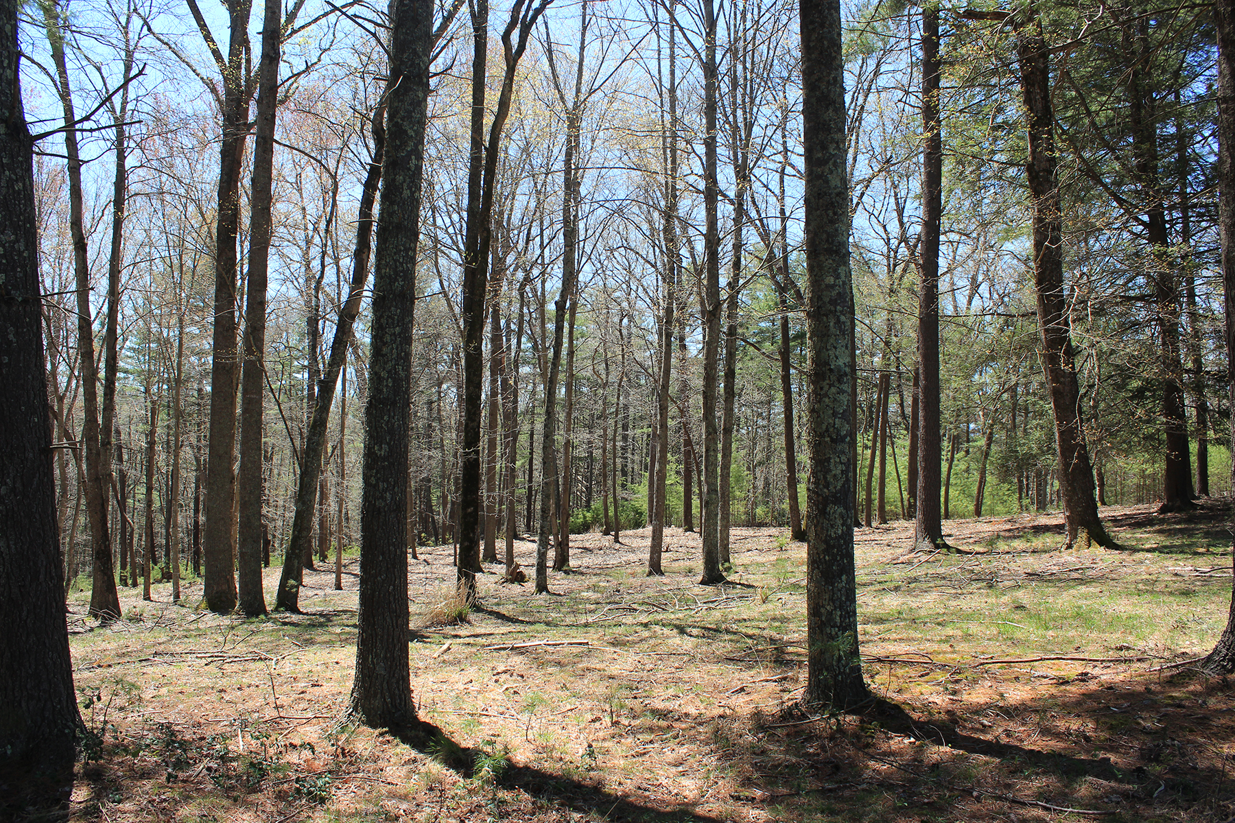 Land for Active at BILTMORE FOREST Lot 1 Cedar Hill Drive Biltmore Forest, North Carolina 28803 United States