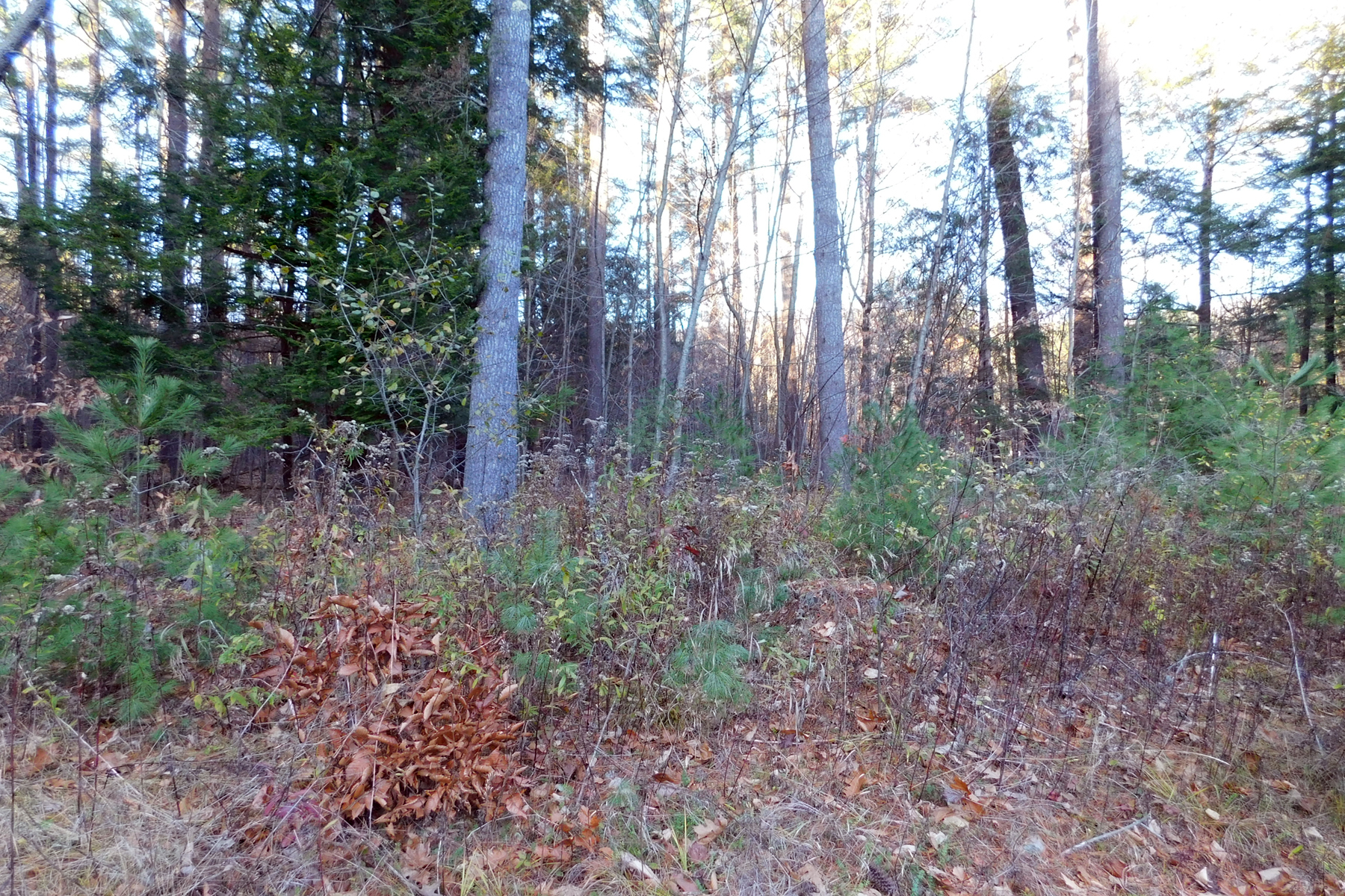 Land for Sale at Knipes Road A, Clarendon Knipes Rd A Clarendon, Vermont 05759 United States