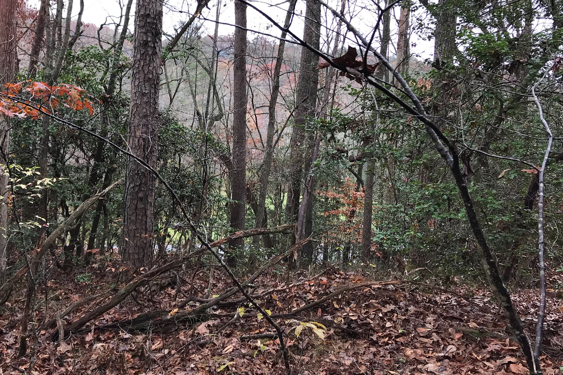 Land for Sale at Beautiful Blue Ridge Wooded Estate Assemblage 0 Overlook Road Blue Ridge, Georgia 30513 United States
