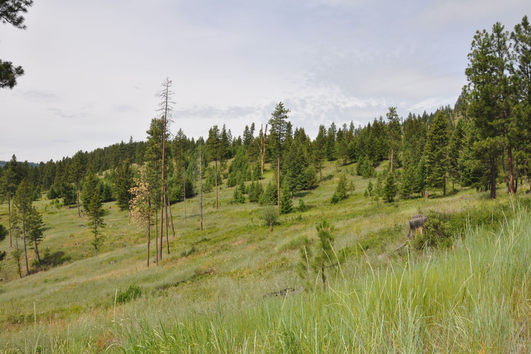 Land for Sale at Lone Elk Trail Kila, Montana 59920 United States