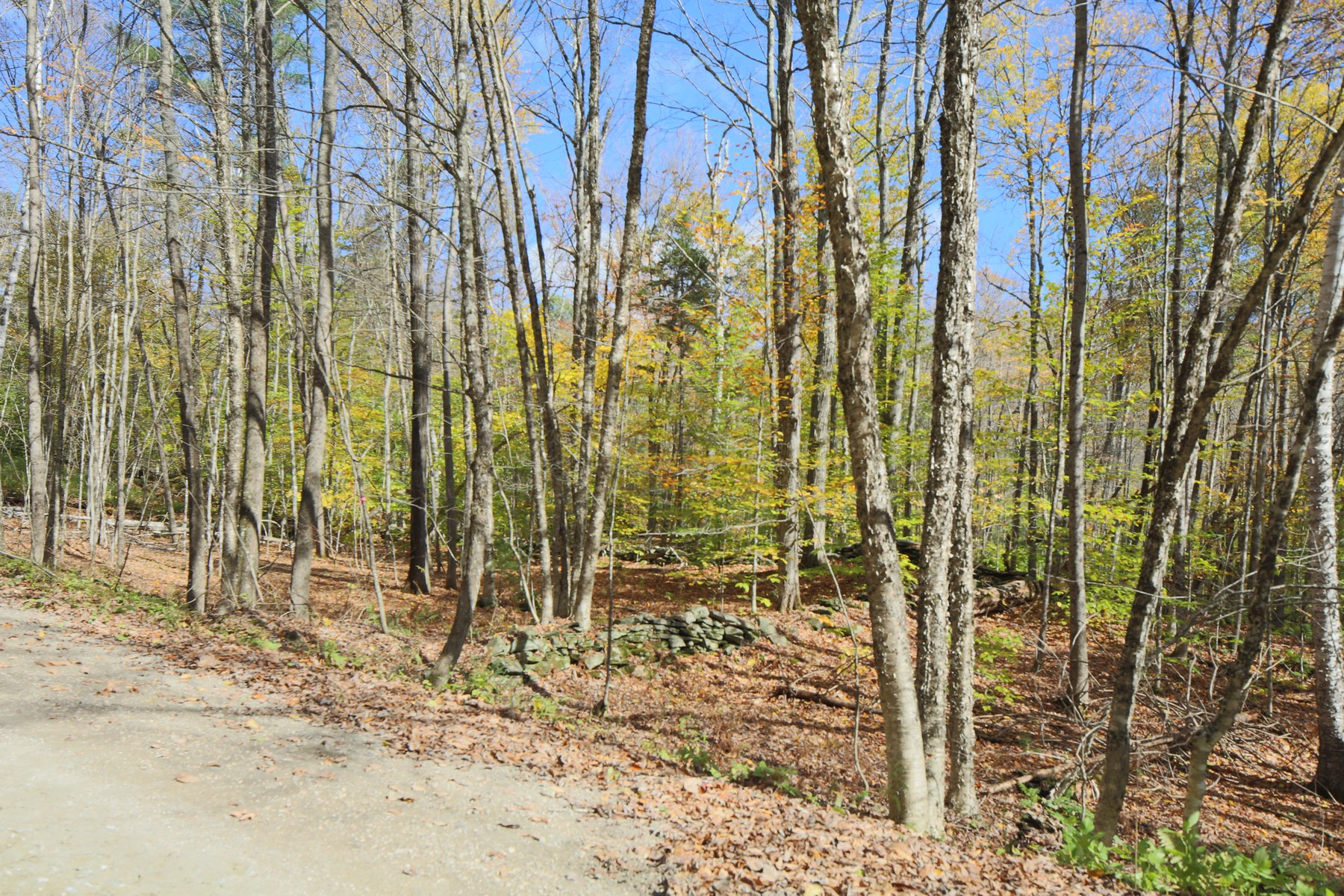 Land for Sale at 12+ Acre Permitted Lot Twenty Mile Stream Rd Lot 22C Reading, Vermont 05062 United States