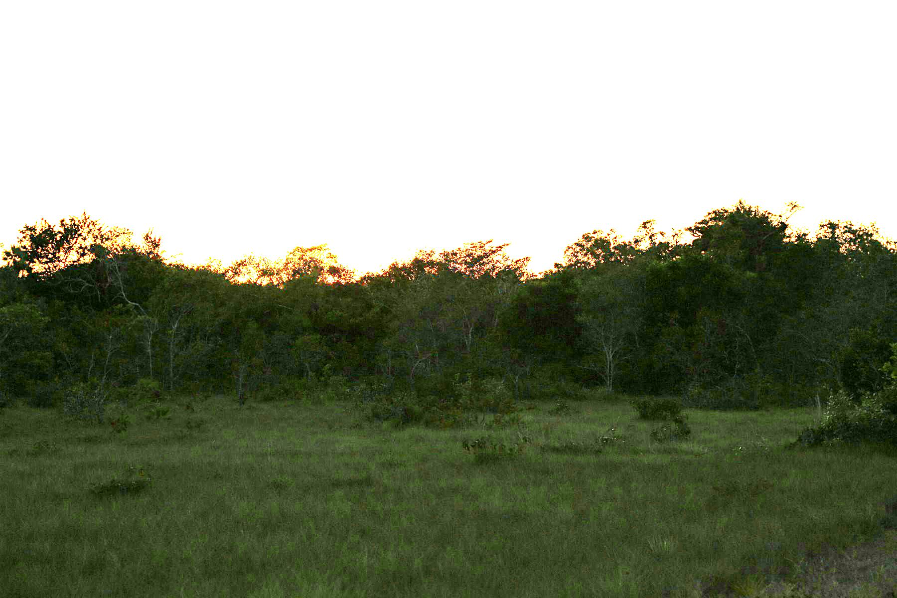 أراضي للـ Sale في 3 Acres in Burrell Boom Burrell Boom, Belize Belize
