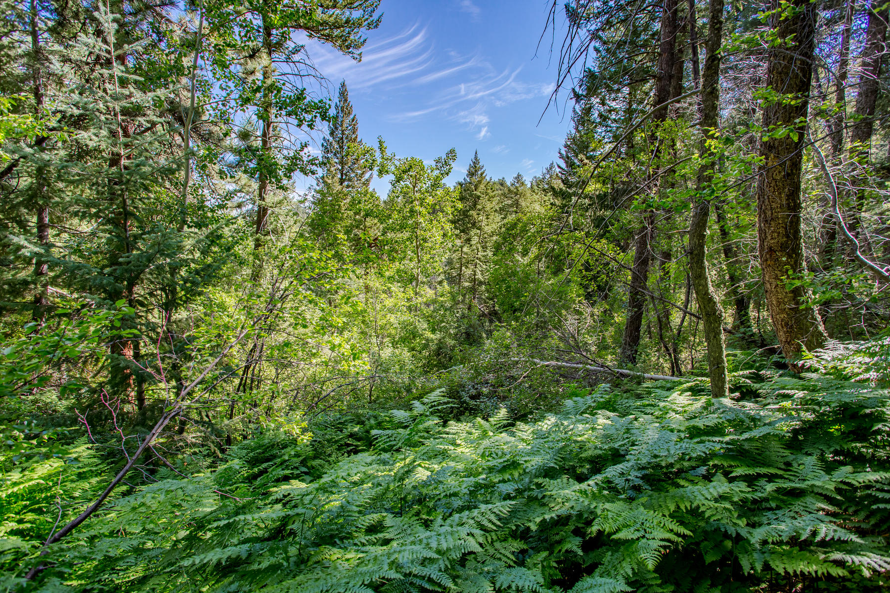 Additional photo for property listing at Dream Home Location 93 Gross Dam Rd Golden, Colorado 80403 United States
