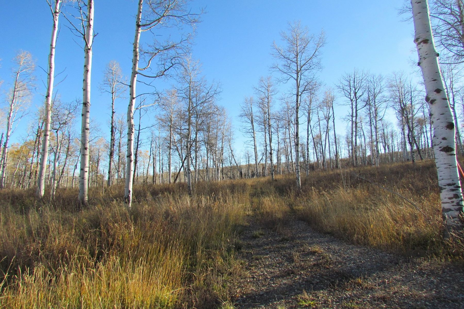 Additional photo for property listing at Murphy Larsen Ranch Lot #10 55932 Hannahs Way Clark, Colorado 80428 United States