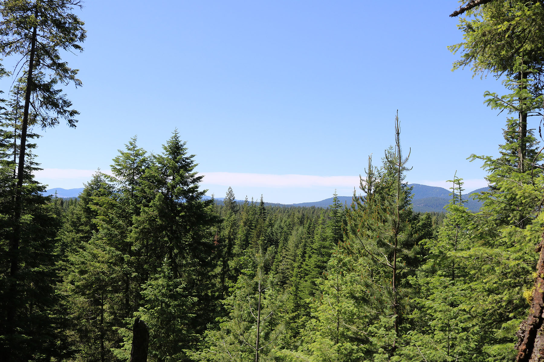 Land for Sale at Beautiful Private 20 Acre View Lot NNA Iora Ln Careywood, Idaho, 83809 United States