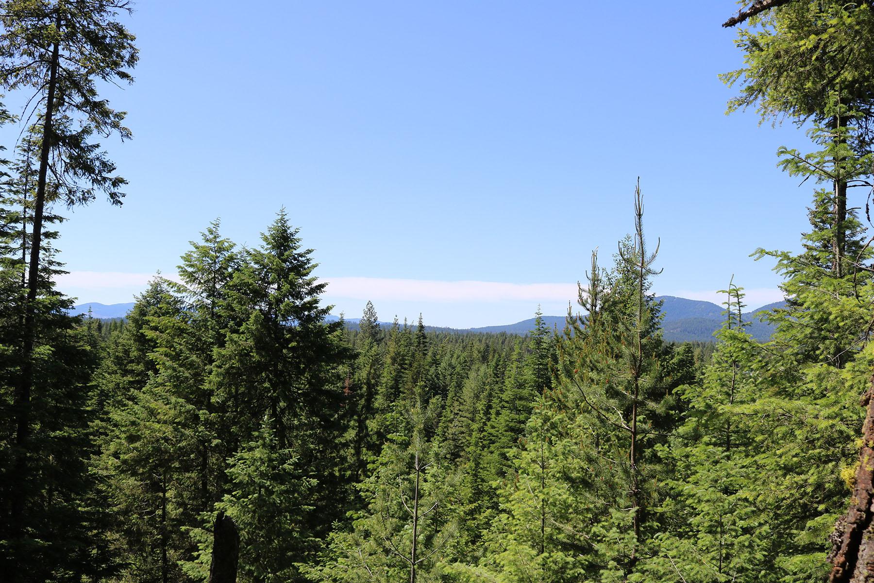 Terreno por un Venta en Beautiful Private 20 Acre View Lot NNA Iora Ln Careywood, Idaho, 83809 Estados Unidos