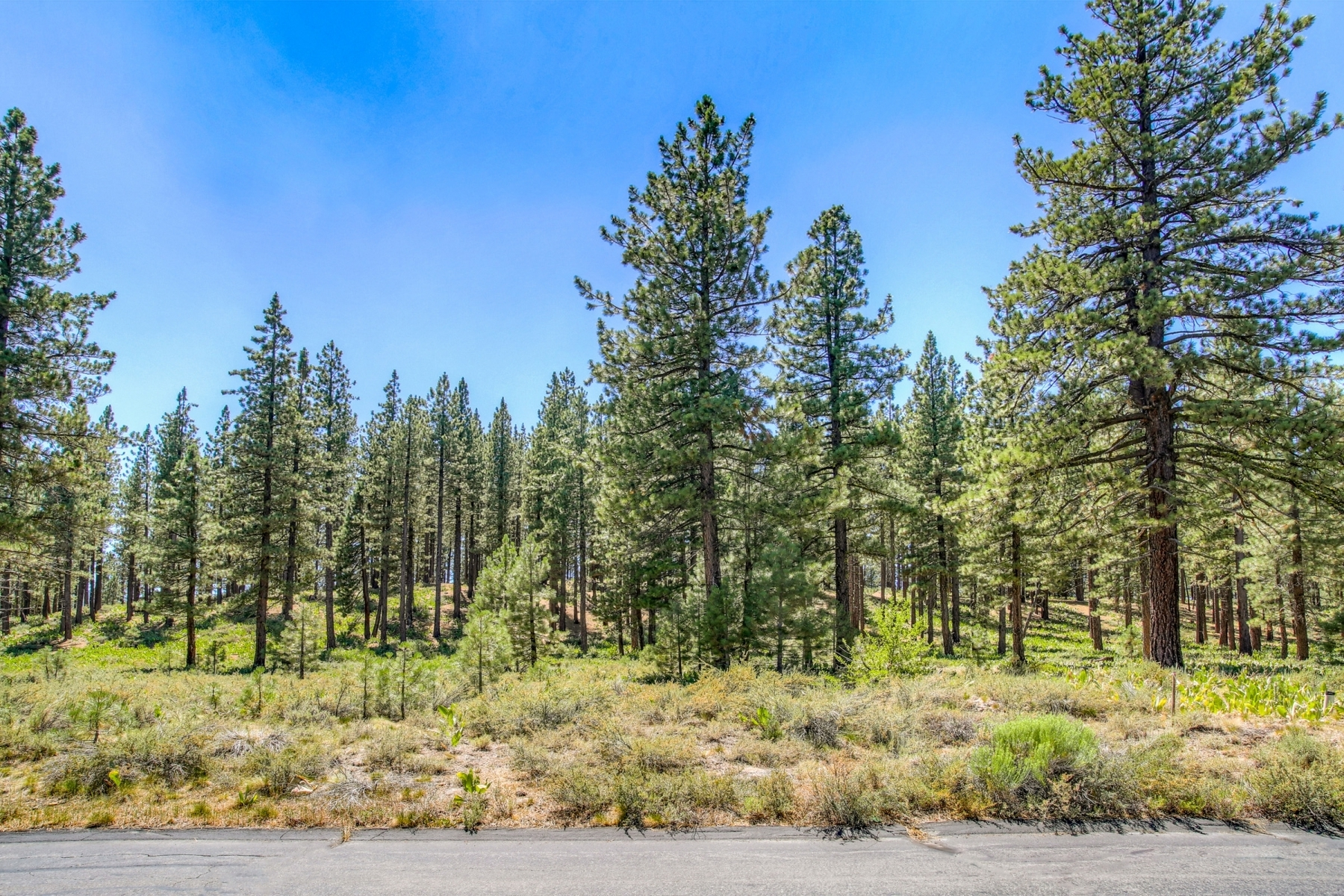Property For Sale Truckee