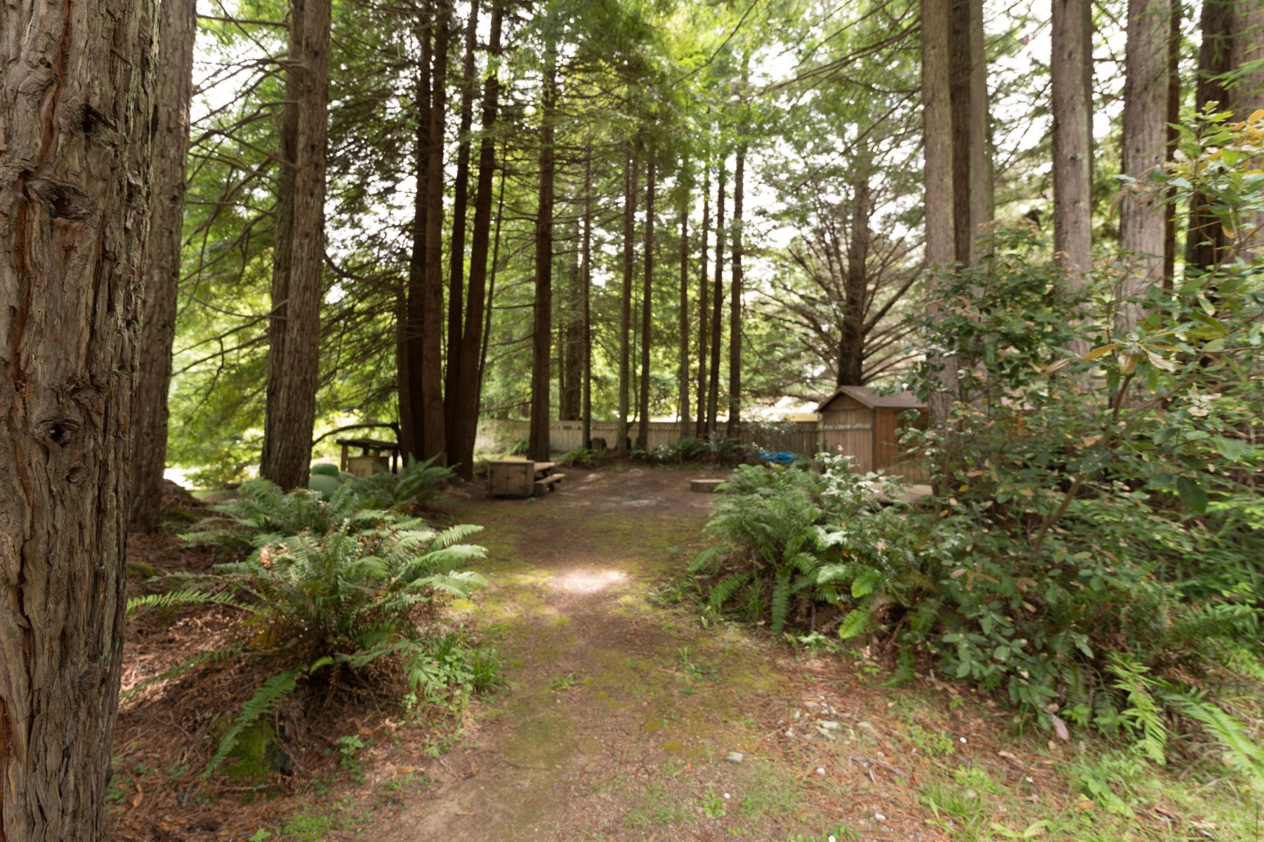 Additional photo for property listing at Coastal Dream 24560 Jimmie Lane Fort Bragg, California 95437 Estados Unidos