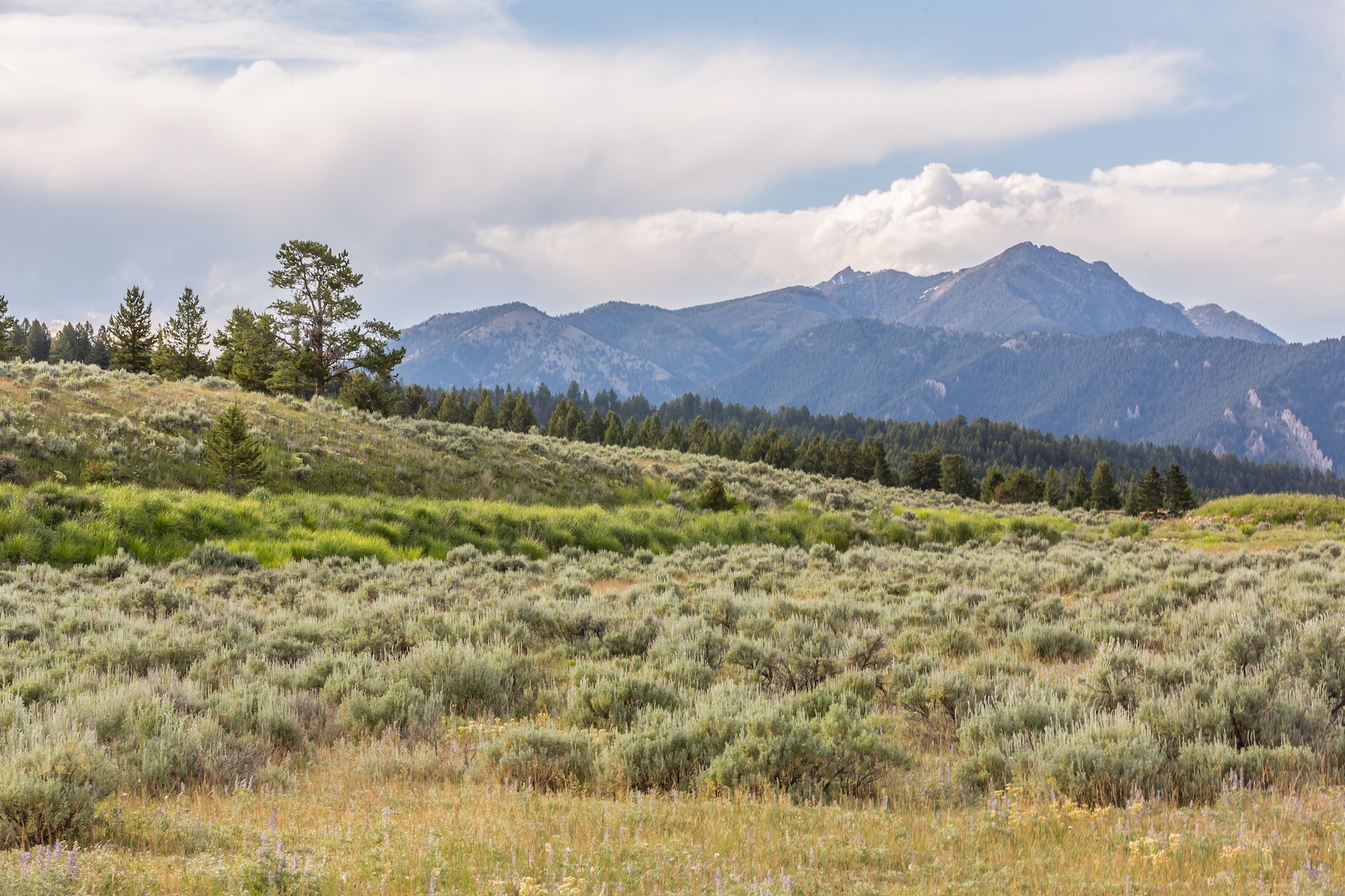 Land for Sale at Beaver Creek West Homesite Twin Antler Drive Big Sky, Montana 59716 United States