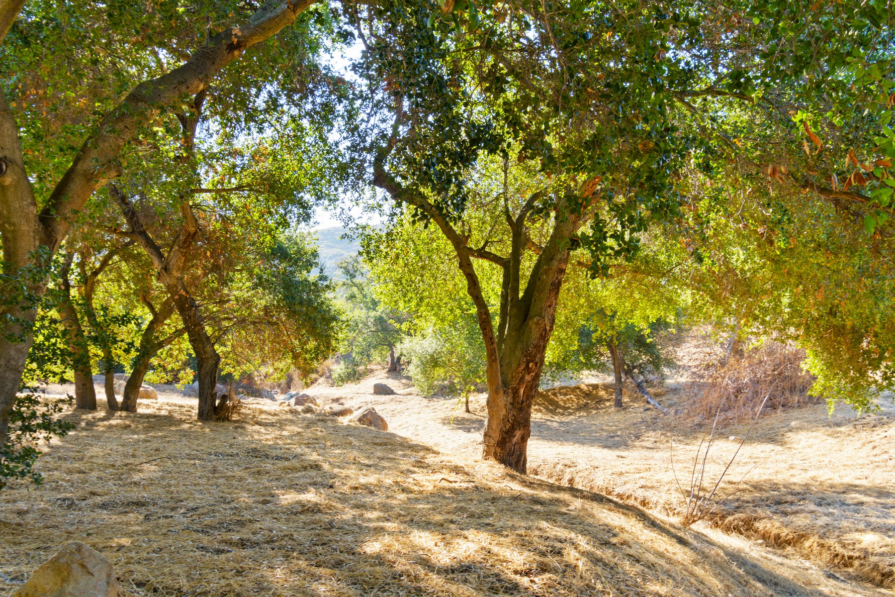 Land for Active at 0 Old Coach Road Poway, California 92064 United States