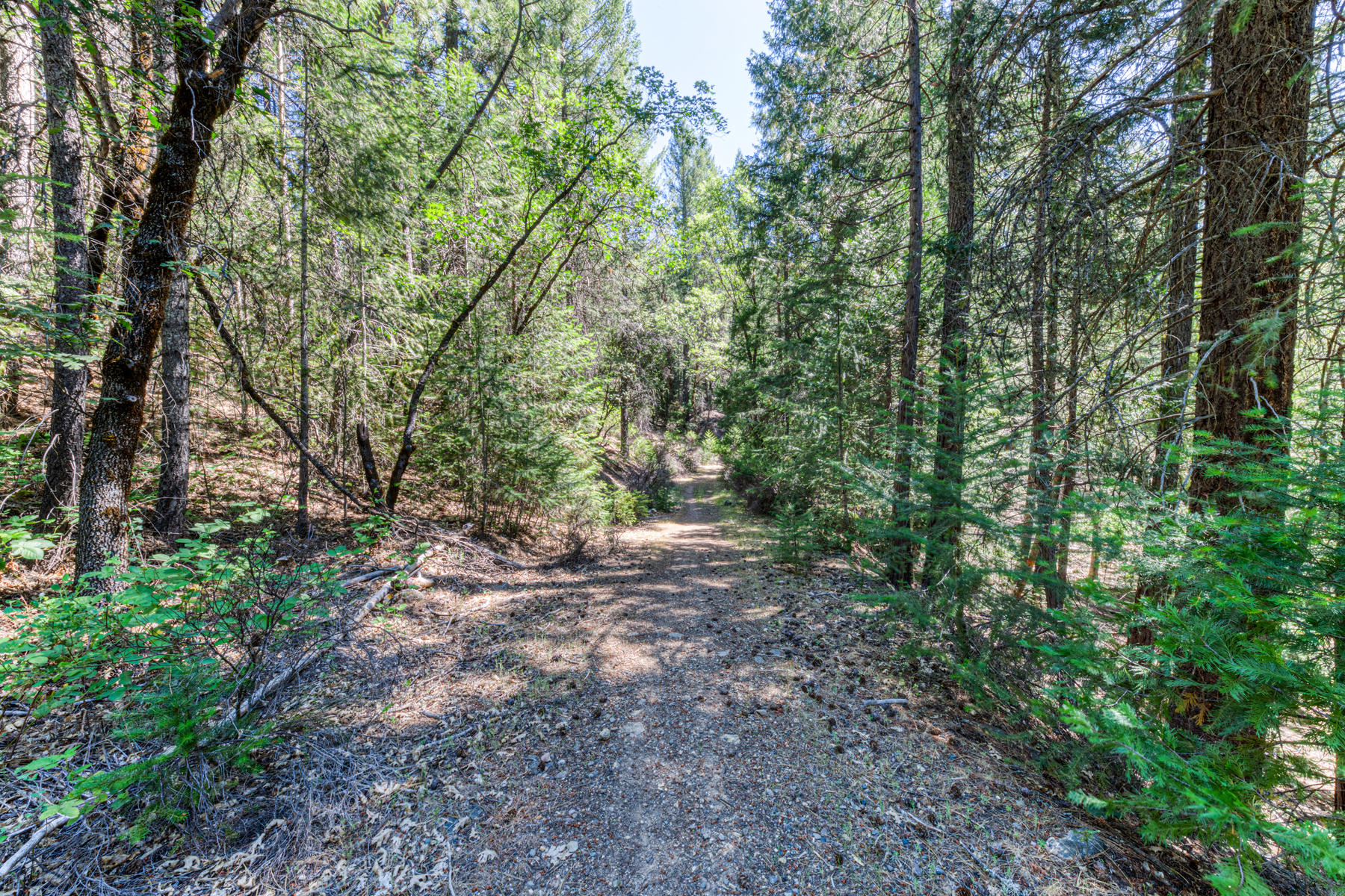 Additional photo for property listing at 37655 Round House Rd. Keddie, CA 95971 37655 Round House Rd. Quincy, California 95971 United States