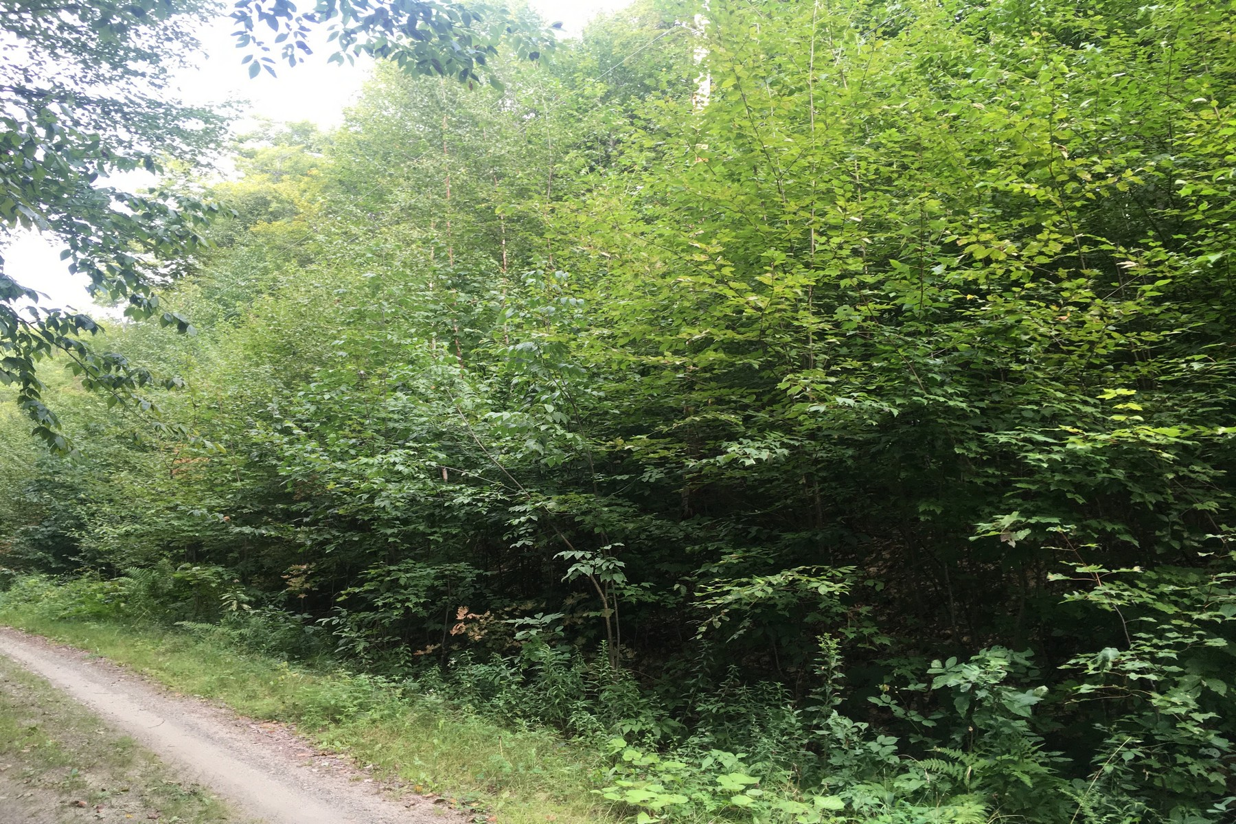 Land for Sale at Permitted 5+ Acre Lot Rist Hill Rd Lot 21B Reading, Vermont 05062 United States