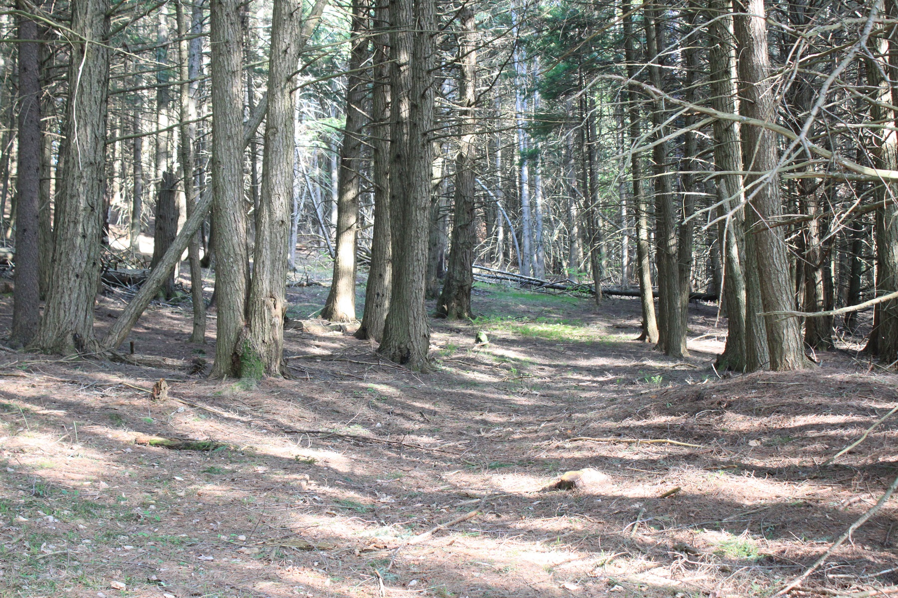 Land for Sale at Building Lot 00 Gully Road Woodstock, Vermont 05091 United States
