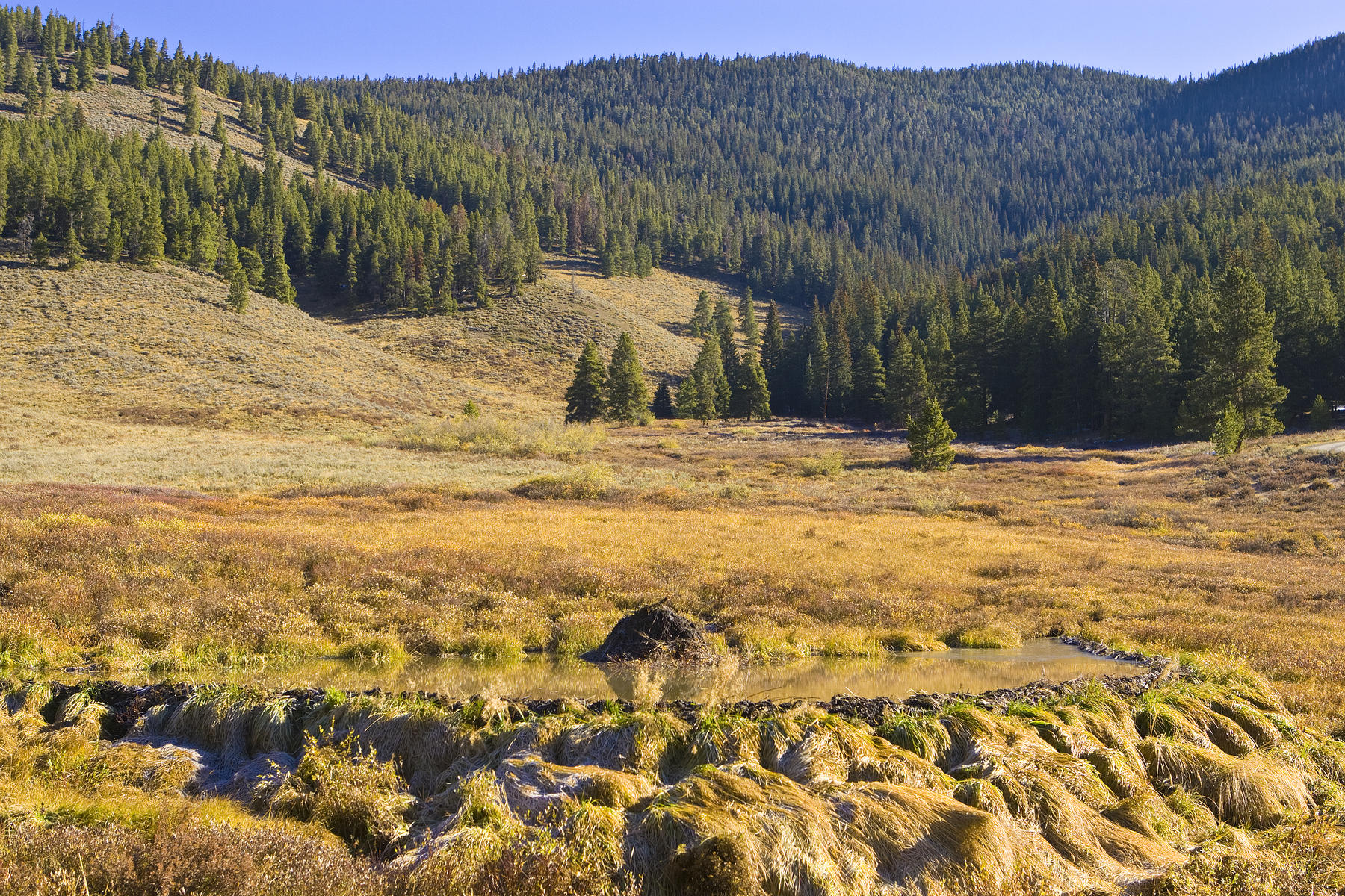 Land for Active at Lot 8 in Muggins Gulch 442 Footfalls Breckenridge, Colorado 80424 United States