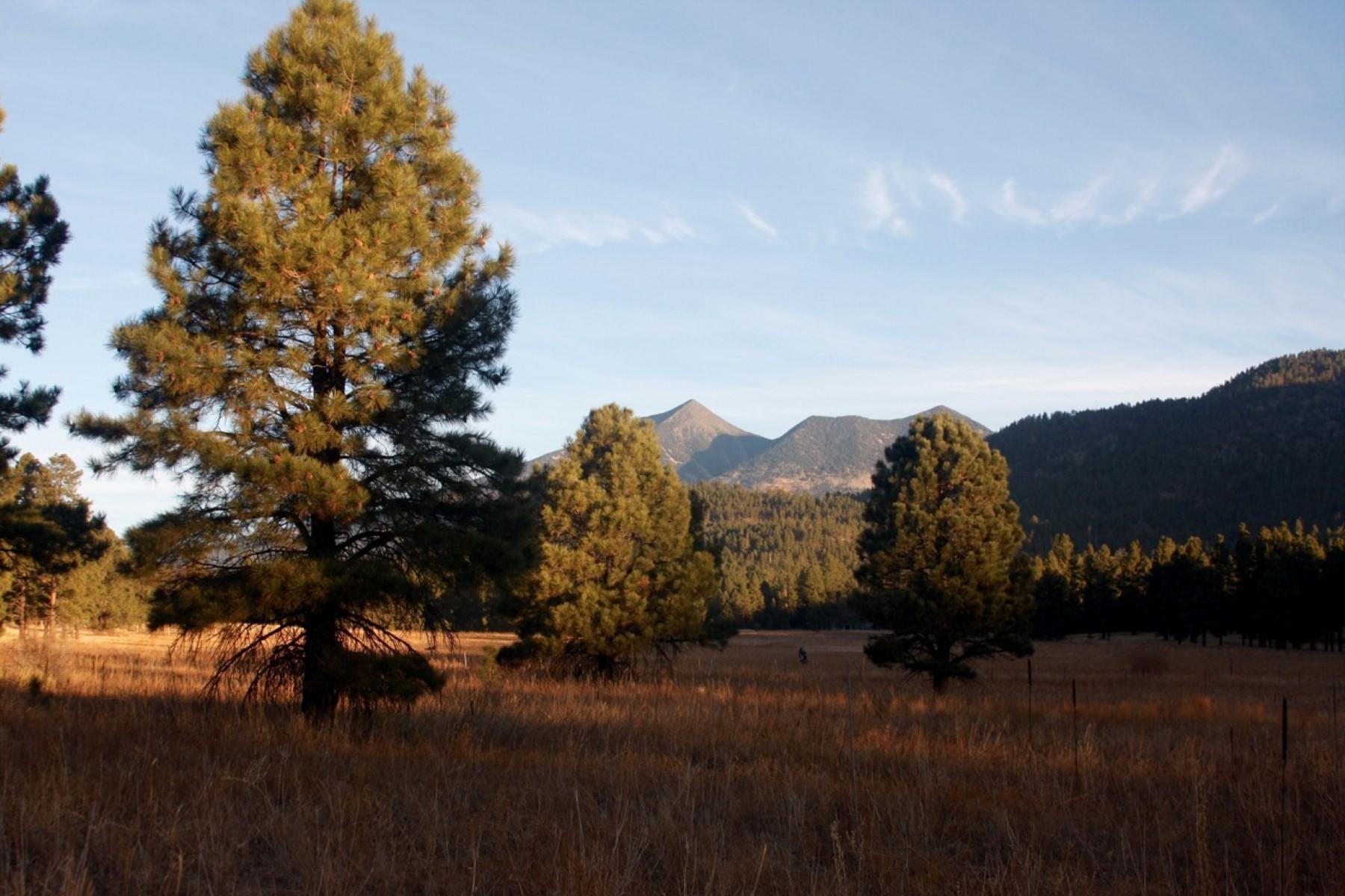 土地,用地 为 销售 在 Beautiful 5 Acre Lot 3889 Hootso Dr, 弗拉格斯塔夫, 亚利桑那州, 86001 美国