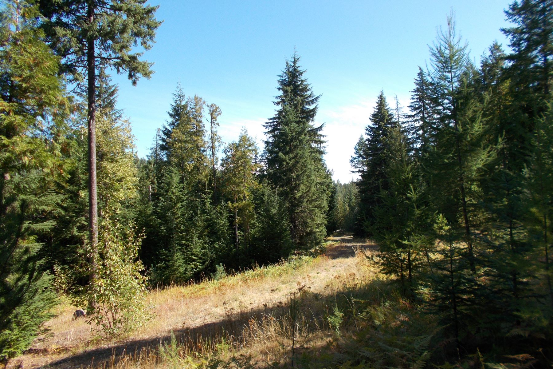 Land for Sale at 8+ acres on paved road with existing well NNA Lot 3 Off Lakeshore Drive, Sagle, Idaho, 83860 United States