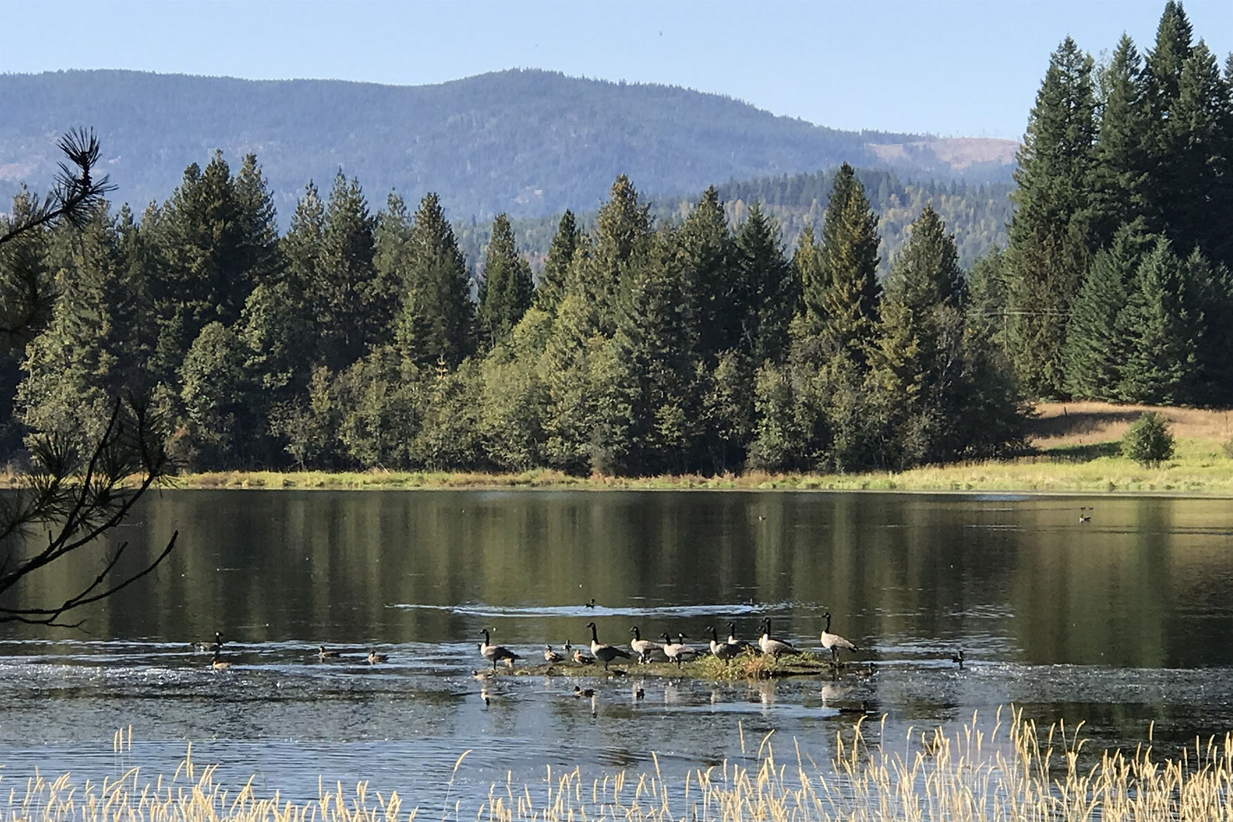 Land for Sale at Great Opportunity for Mountain Living Blk 1 Lot 6 Ledges Dr Sagle, Idaho 83860 United States