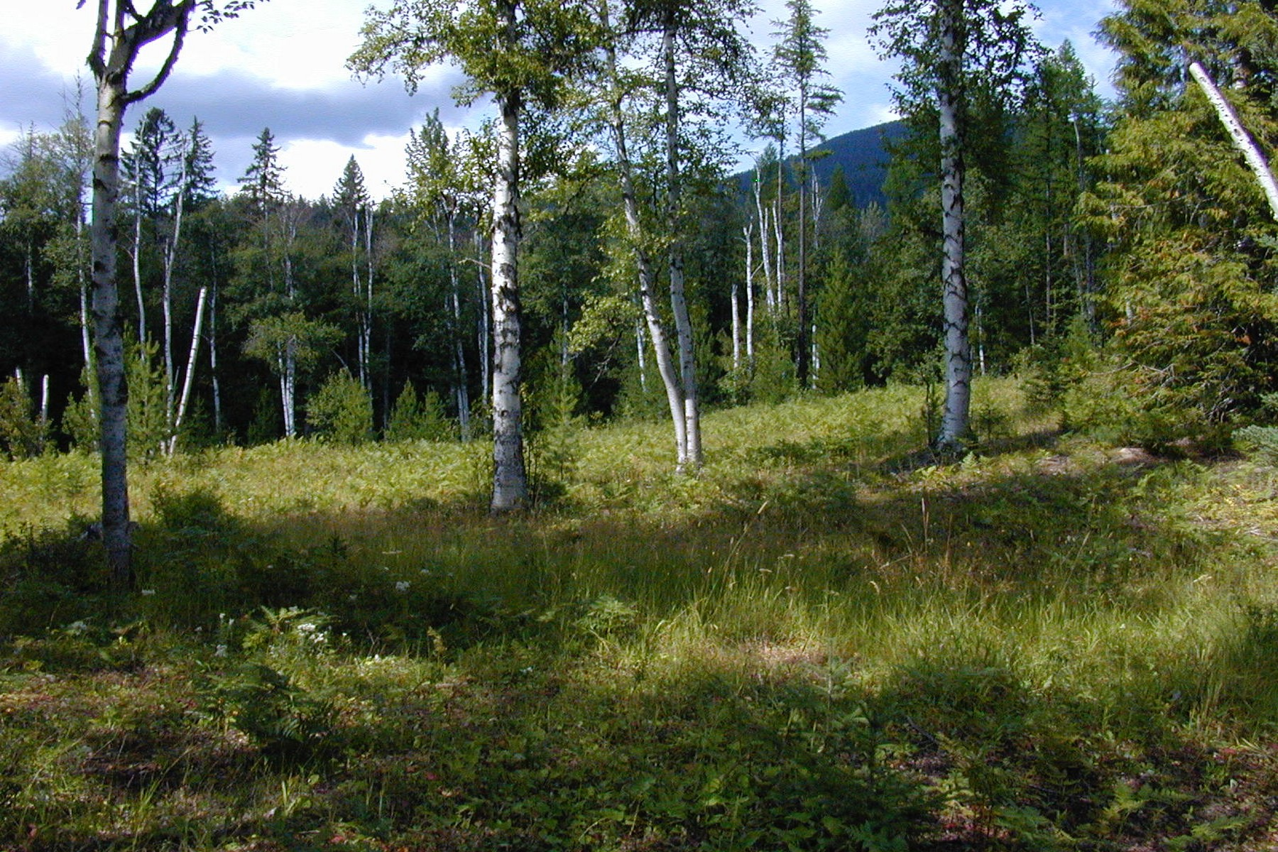 Additional photo for property listing at 575 Haskill Creek Road, Whitefish, MT 59937 575  Haskill Creek Rd Whitefish, Montana 59937 United States