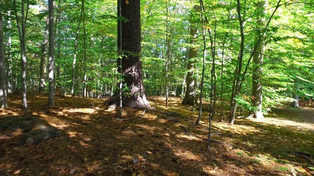 Additional photo for property listing at 74 Sargent Beechwood, Brookline  Brookline, Massachusetts 02445 United States