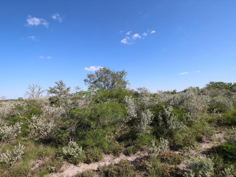 Additional photo for property listing at 2.097+/- Acres Lagarto Valley Ranch CR 235 Orange Grove, Texas 78061 Estados Unidos