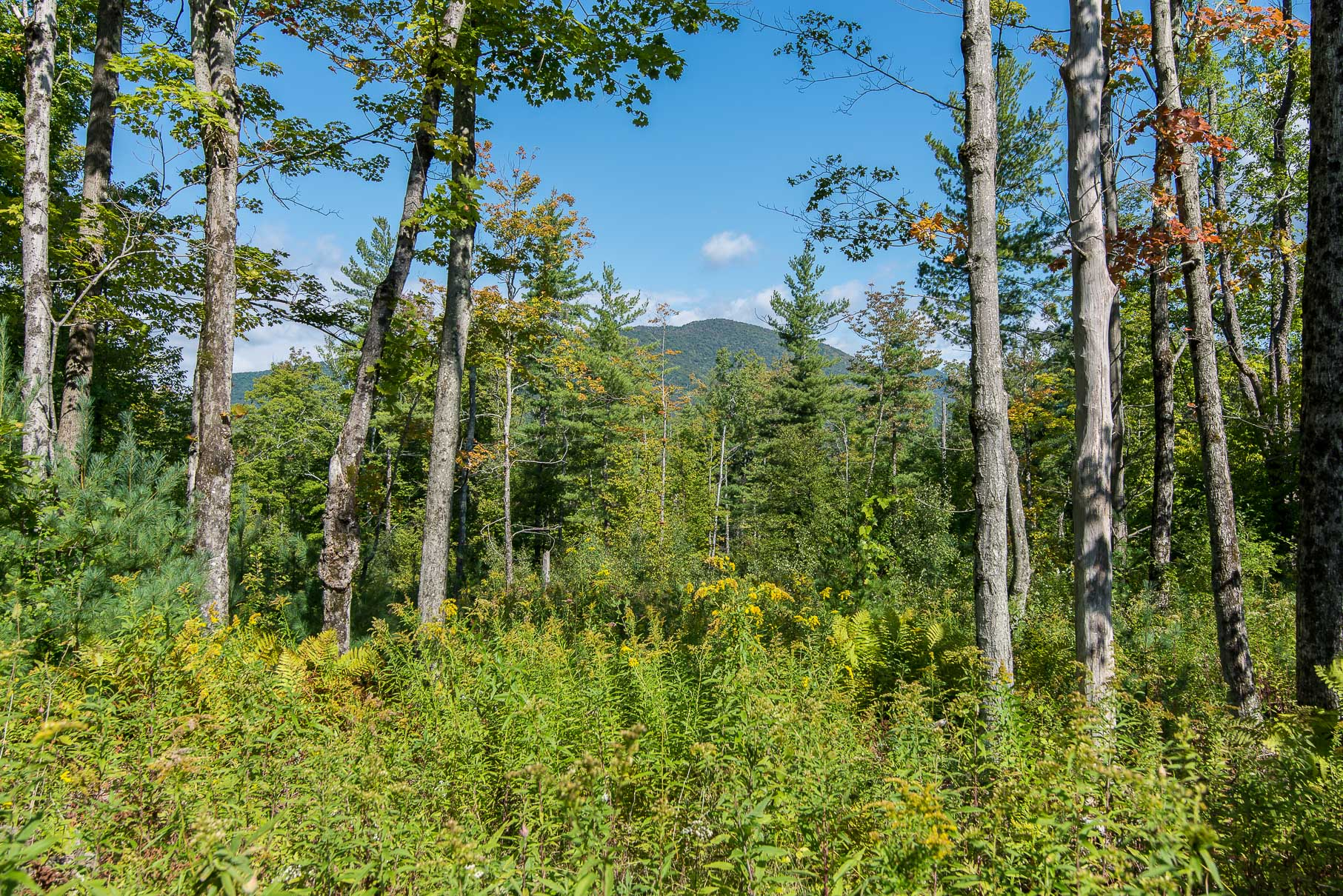 Land for Sale at Dorset Hollow Land Opportunity 0 Coolidge Dorset, Vermont, 05251 United States