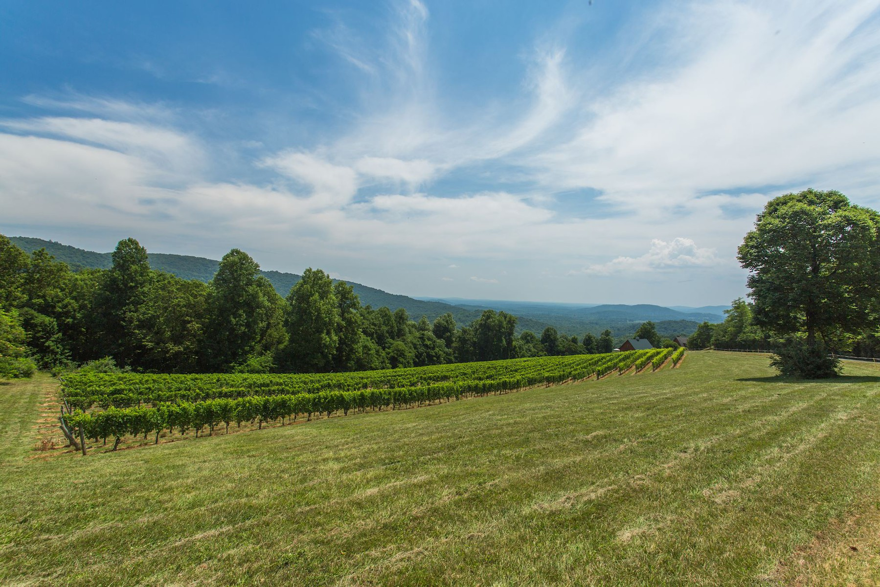 Additional photo for property listing at Chester Gap Cellars 4615 Remount Rd Front Royal, Virginia 22630 Vereinigte Staaten