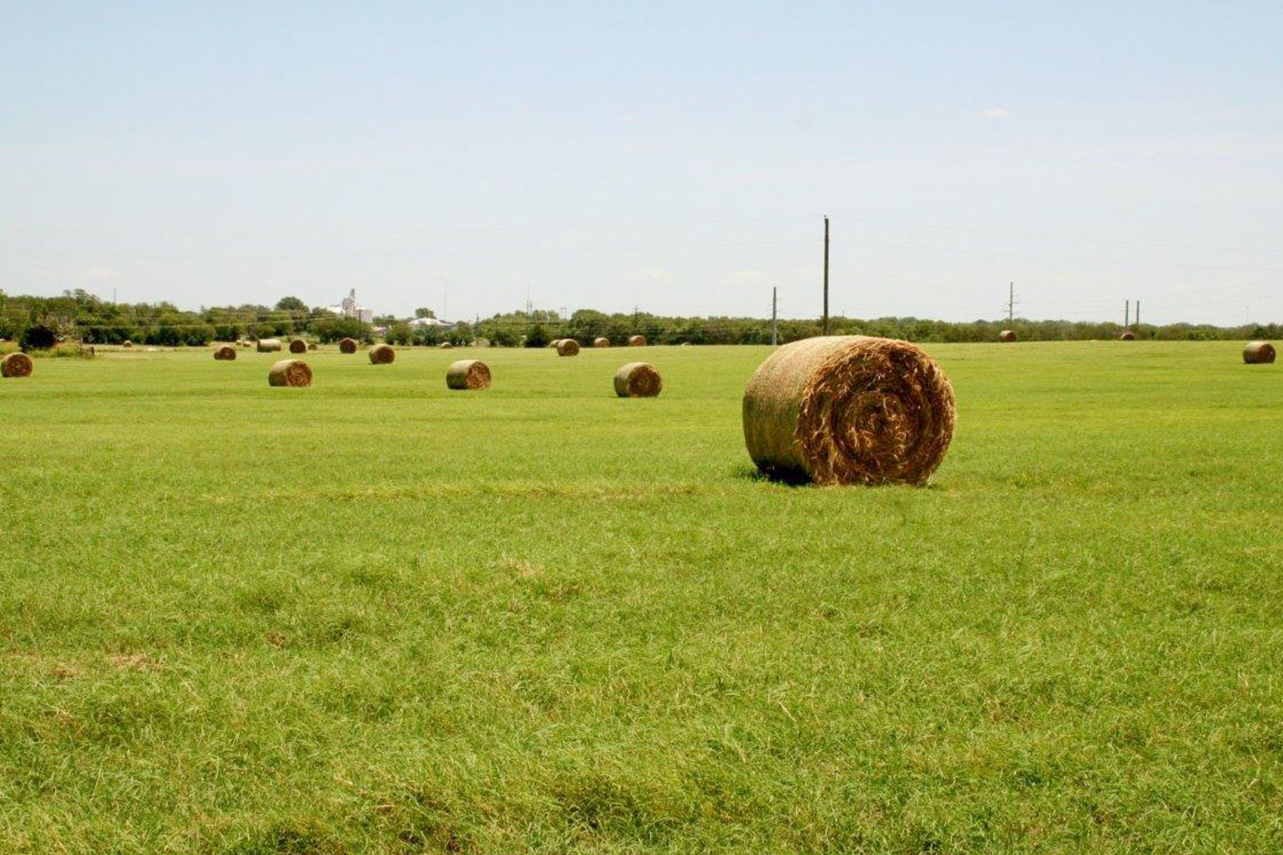 Farm / Ranch / Plantation for Sale at 250 Acres in Whitesboro 00 W Hwy 56 Whitesboro, Texas 76273 United States
