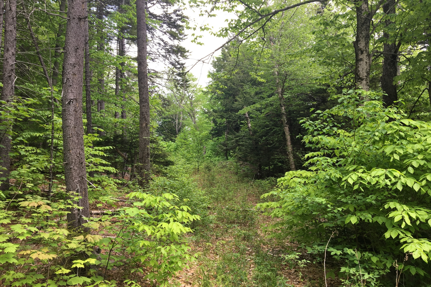 Land for Sale at 1.9 Acres in Snow Mountain Farms West 44 Leon Stocker Dr Stratton, Vermont, 05360 United States