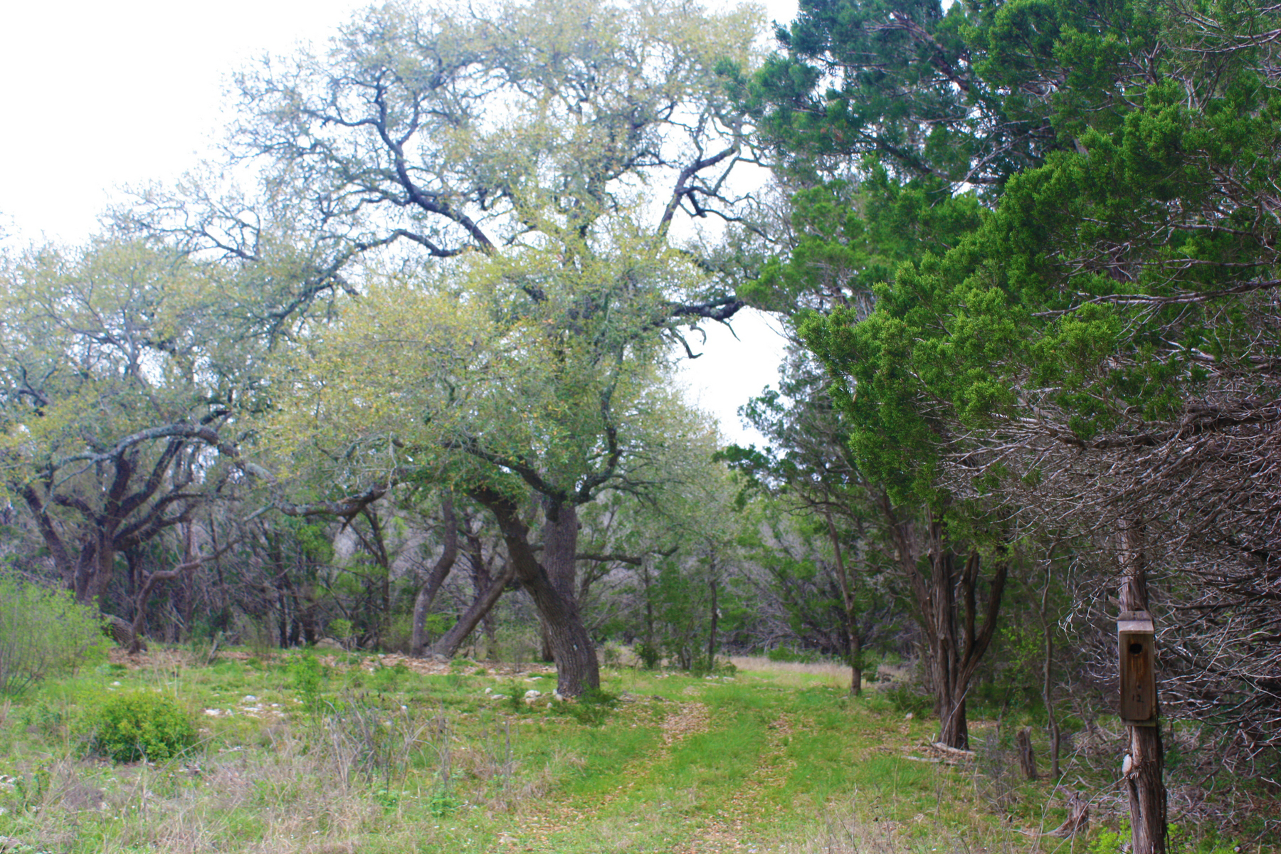 Additional photo for property listing at 55+/- Acres in Bexar Co. 6780 FM 1863 Bulverde, Texas 78163 Estados Unidos