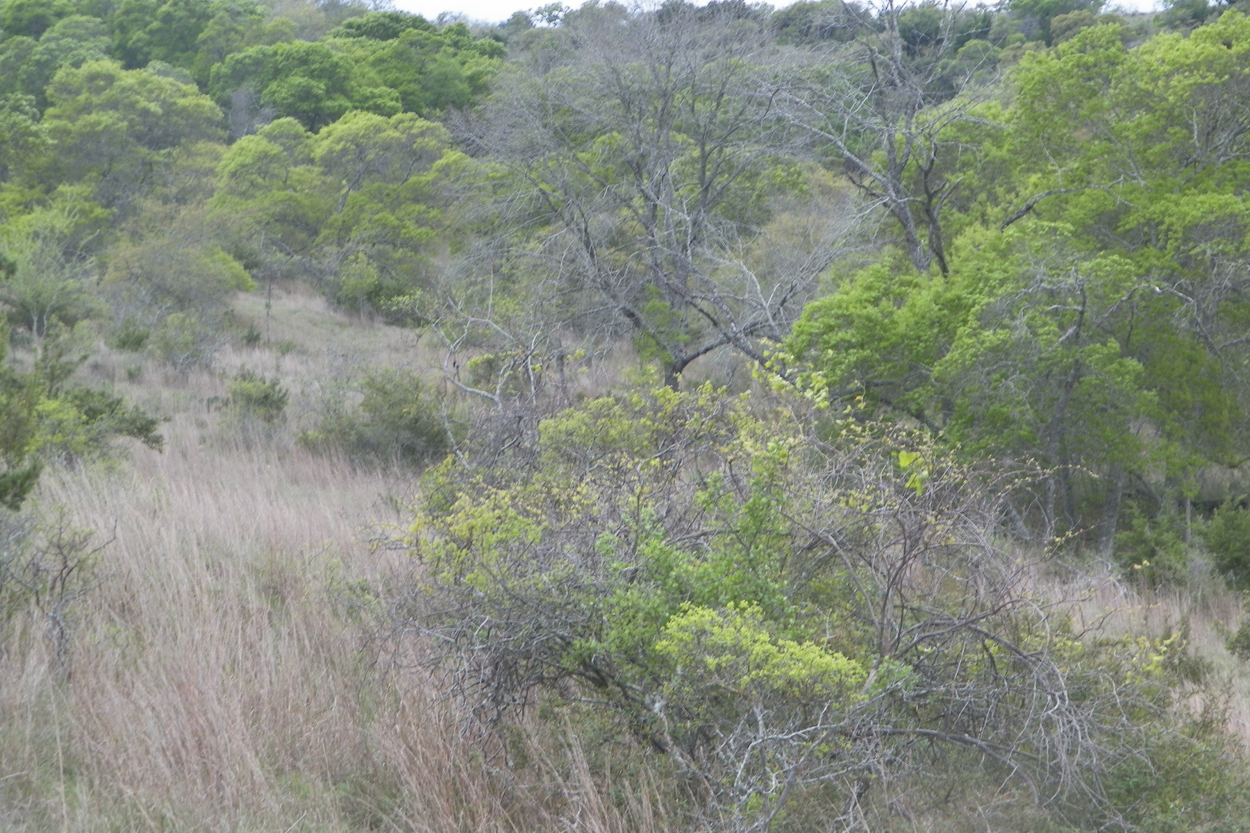 Additional photo for property listing at Private Lot in Falling Water 135 Echo Canyon Dr Comfort, Texas 78013 United States