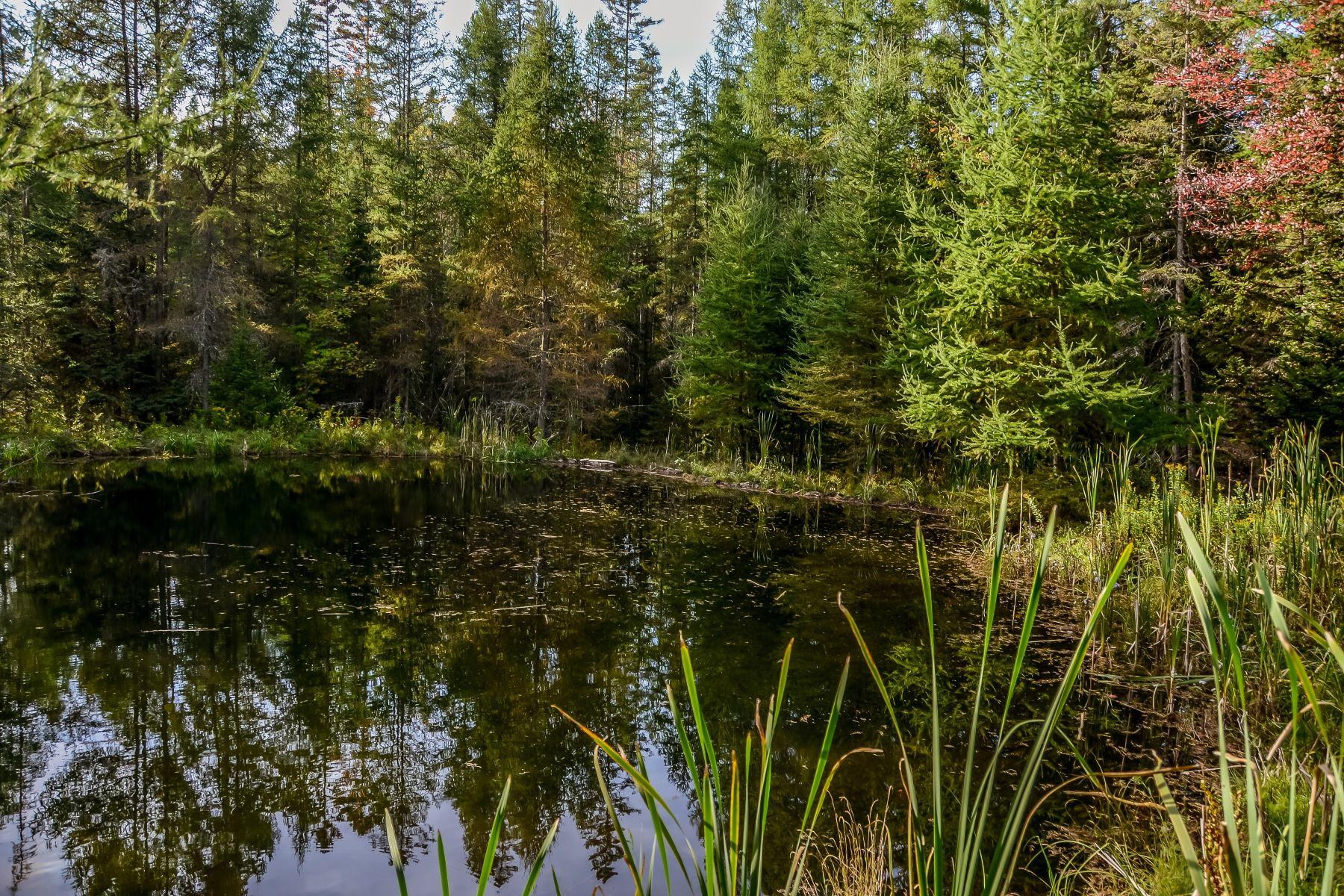 Terreno por un Venta en Large Wooded Lot in Corinth 0 Brook Rd, Corinth, Vermont, 05039 Estados Unidos