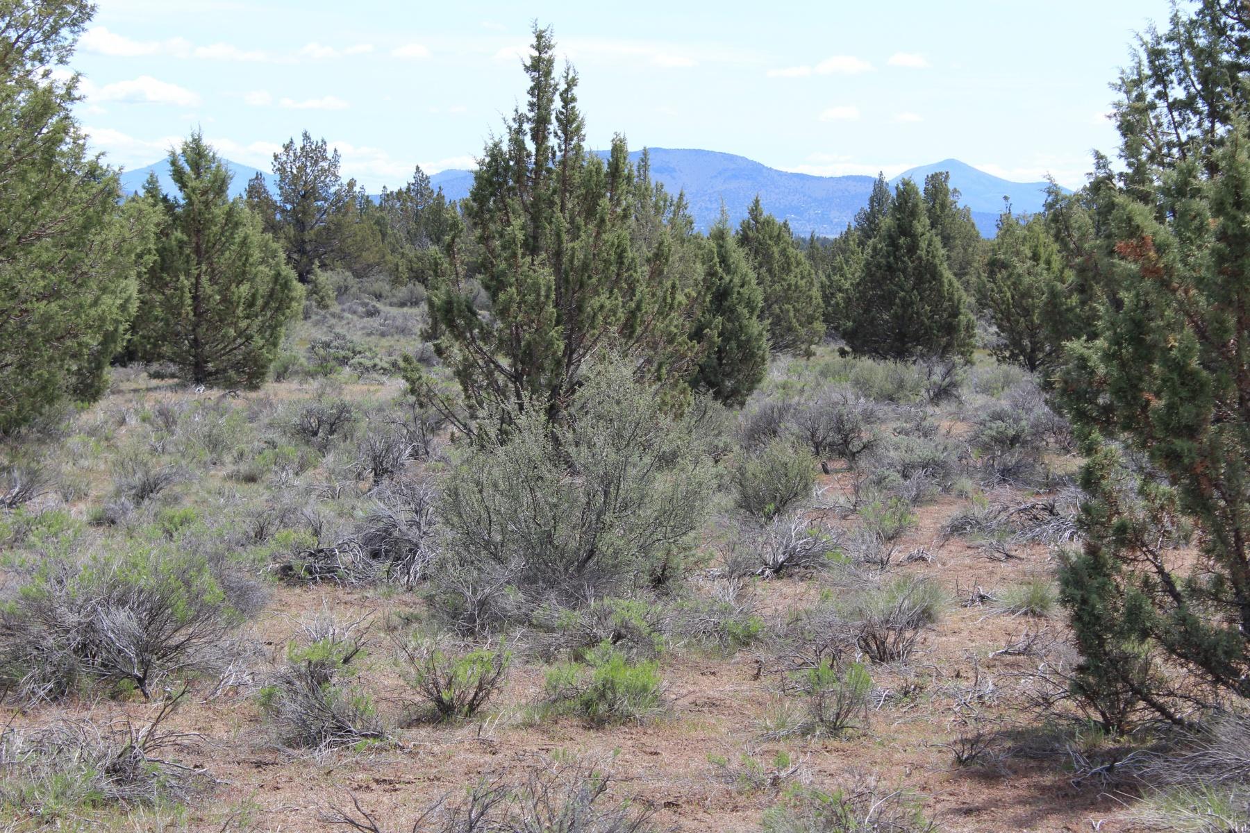 土地 为 销售 在 78 Acres w/Cascade Mtn Views 0 SW County Road 590 TL 1100 卡尔弗, 俄勒冈州, 97734 美国