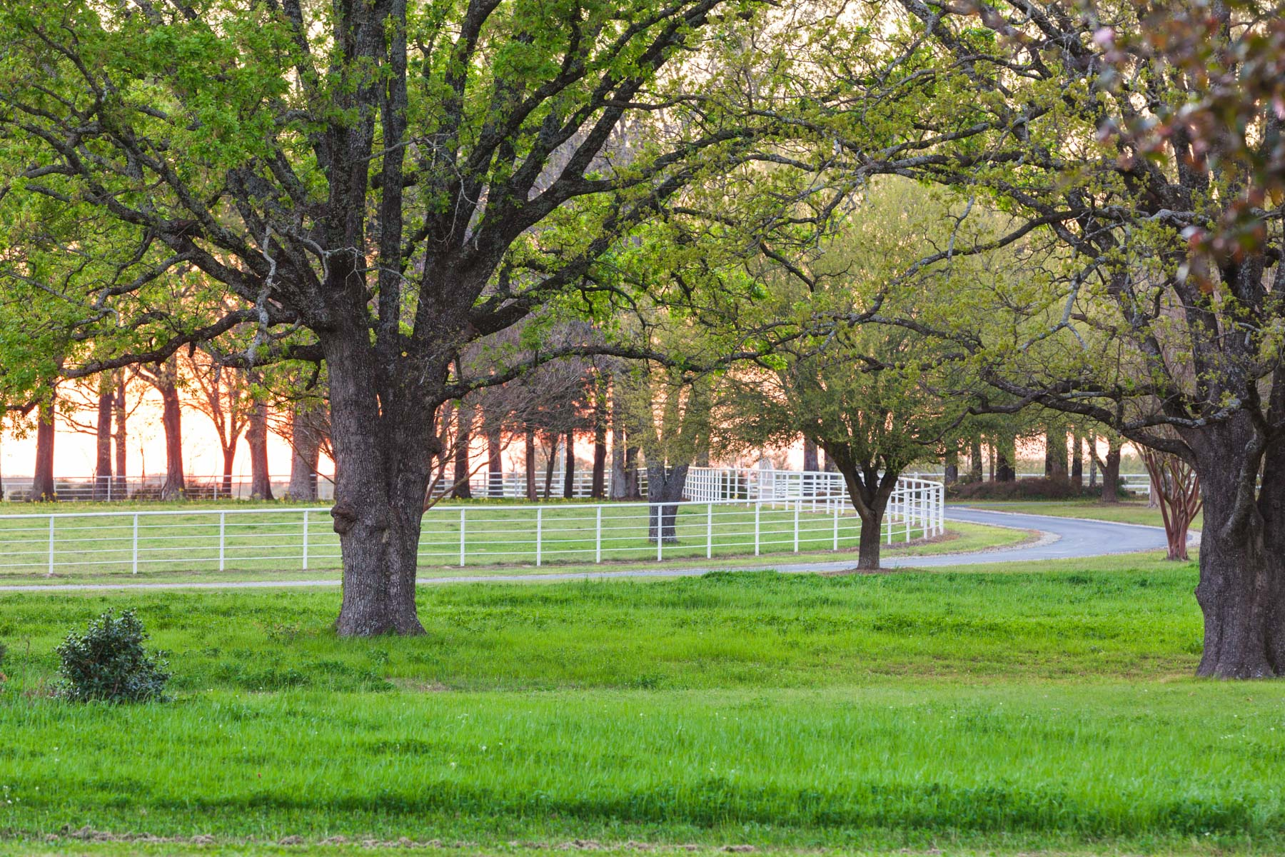 Additional photo for property listing at Raintree Ranch - 450 Acres 3641 Rs County Road 1320 Emory, Texas 75440 Estados Unidos