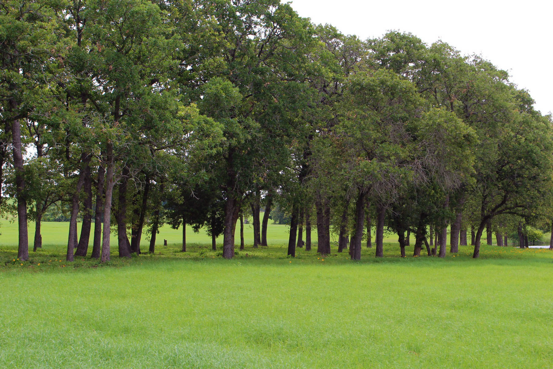 Additional photo for property listing at 272± Acres Bastrop Co. - Mid Springs Creek Ranch 272+/- Acres / Bastrop County Paige, Texas 78659 Estados Unidos