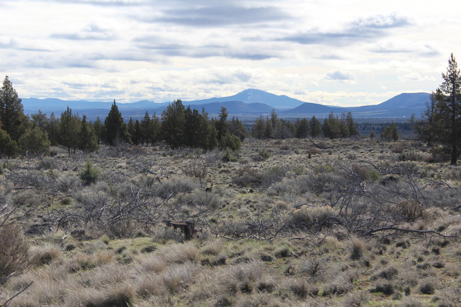 土地 为 销售 在 40 Acres near Lake Billy Chinook 0 Graham Rd TL 300 卡尔弗, 俄勒冈州, 97734 美国