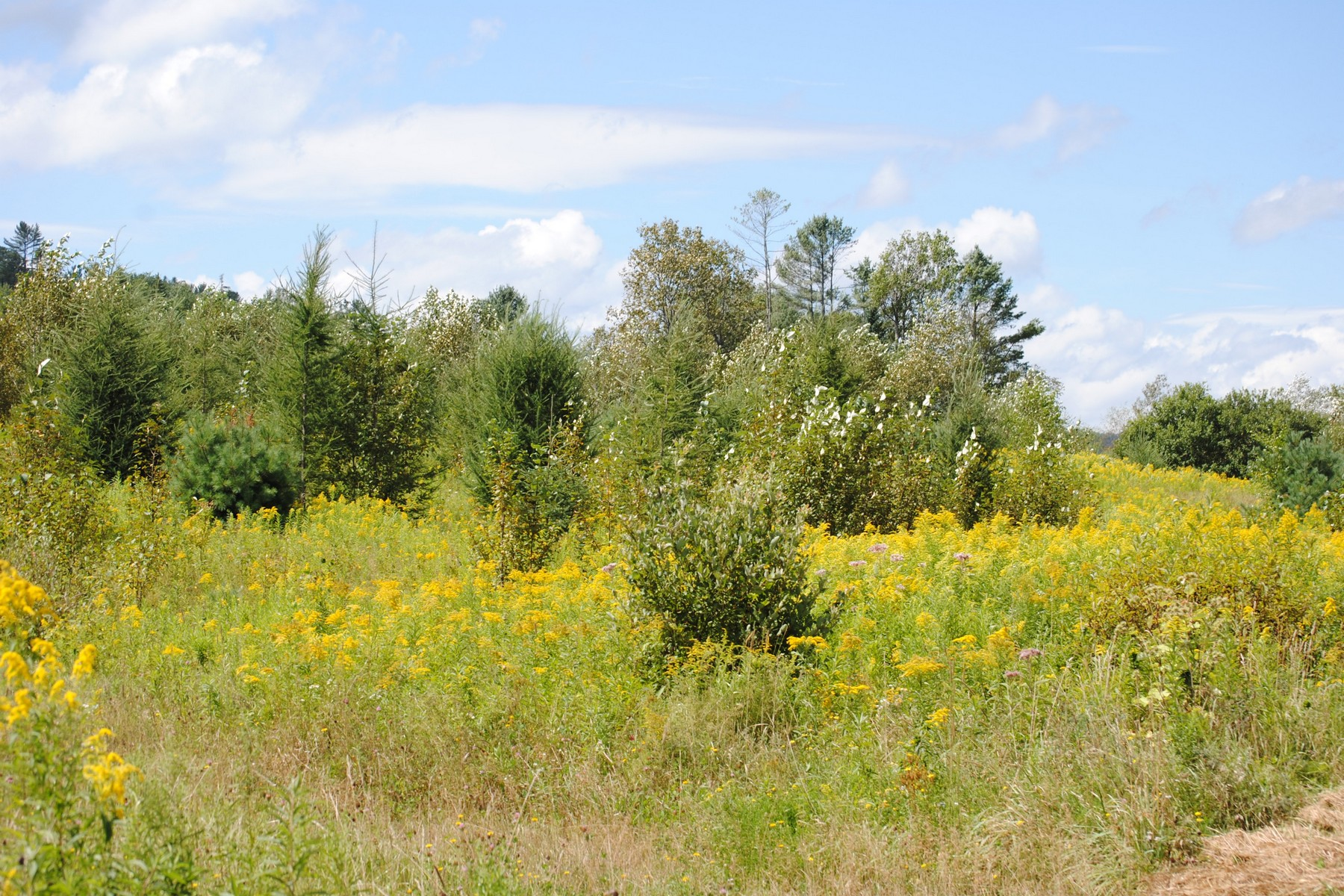 Land for Sale at 781 Route 122, Wheelock Wheelock, Vermont, 05851 United States