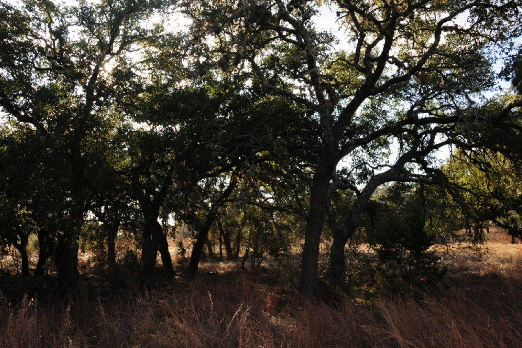 Additional photo for property listing at Magnificient Lot in Mystic Shores 424 Arthur Ct Spring Branch, Texas 78070 United States