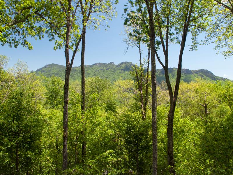 토지 용 매매 에 LINVILLE RIDGE - SPLIT ROCK ESTATES 1729 Forest Ridge Drive Linville, 노스캐놀라이나, 28646 미국