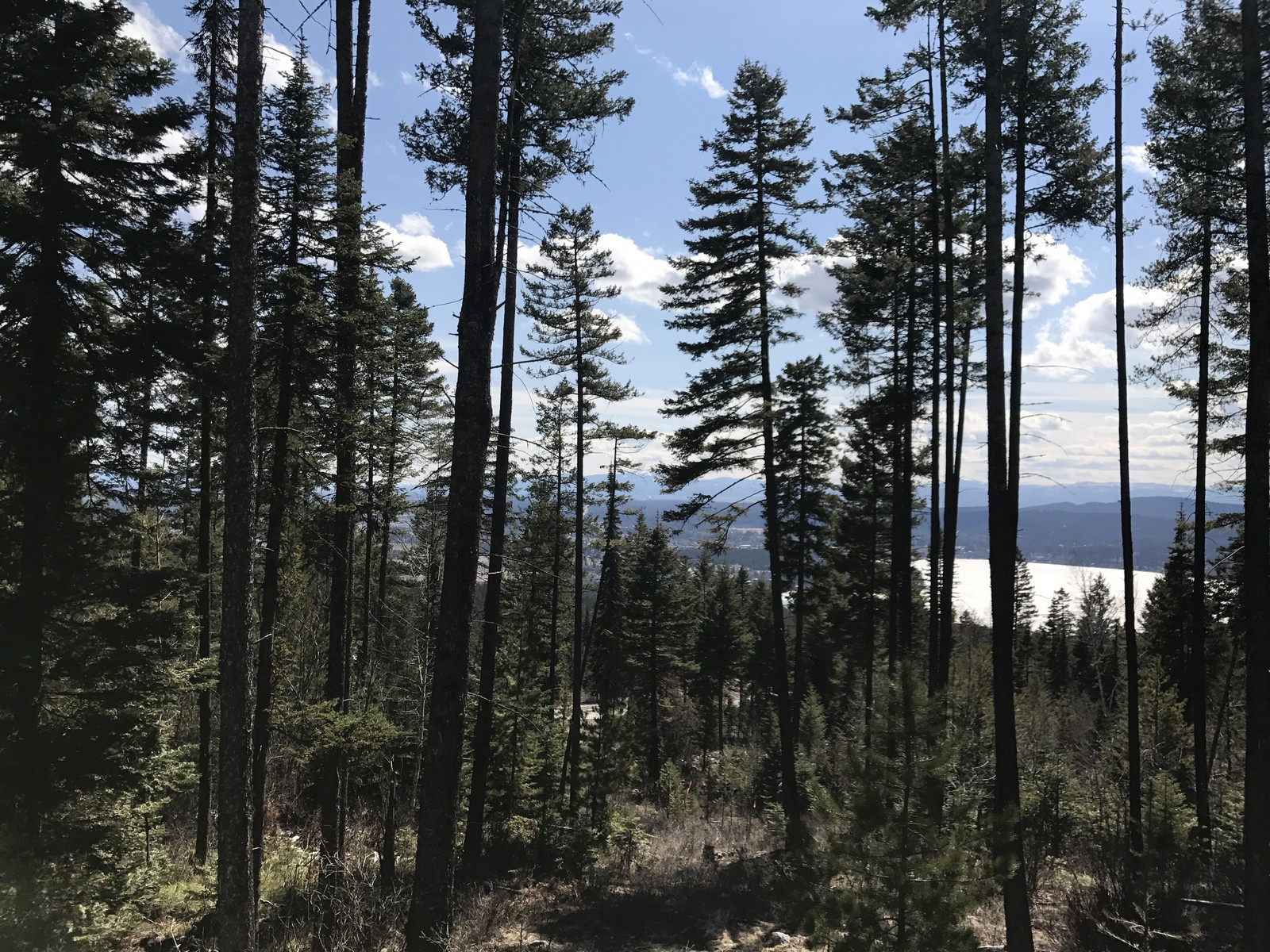 Land for Sale at 105 Bitterroot Court, Lot 171, Whitefish, MT 59937 105 Bitterroot Ct Lot 171 Whitefish, Montana, 59937 United States