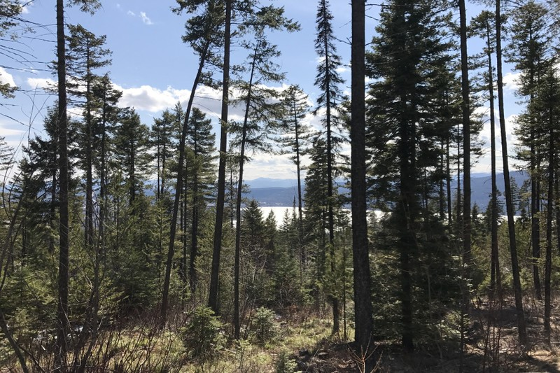 Additional photo for property listing at 105 Bitterroot Court, Lot 171, Whitefish, MT 59937 105  Bitterroot Ct Lot 171 Whitefish, Montana 59937 United States