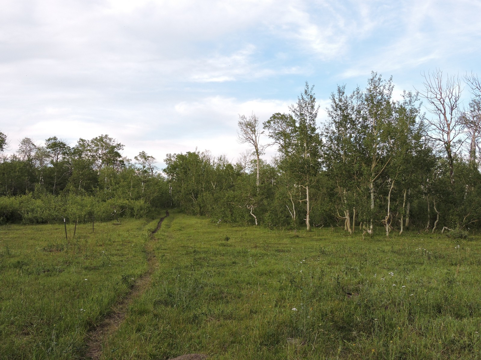 Additional photo for property listing at 80 N Shore Duck Lake Rd , Babb, MT 59411  Other Areas, Montana 59411 United States