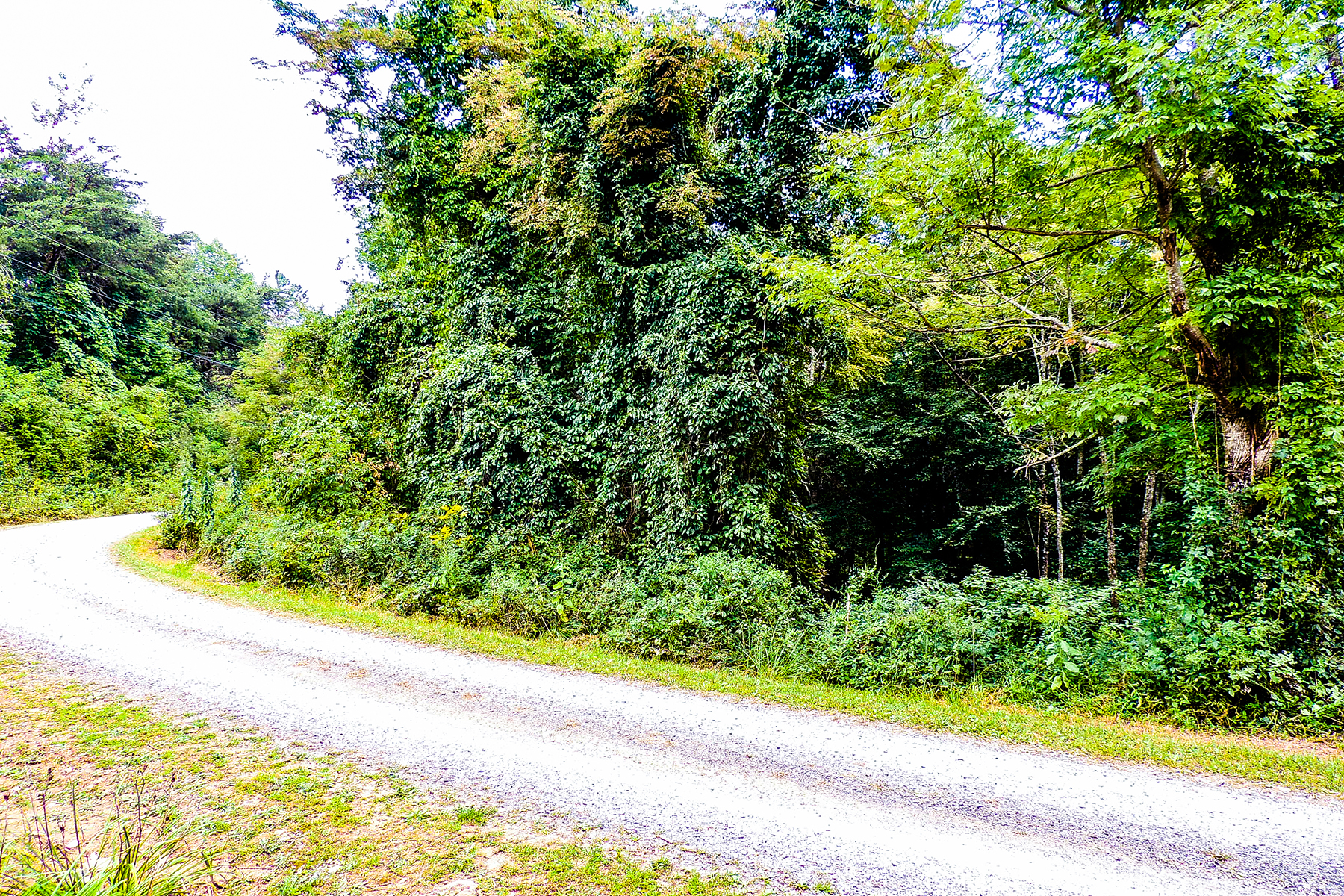 Land for Active at 288 Bearwallow Road , 25 Leicester, North Carolina 28748 United States
