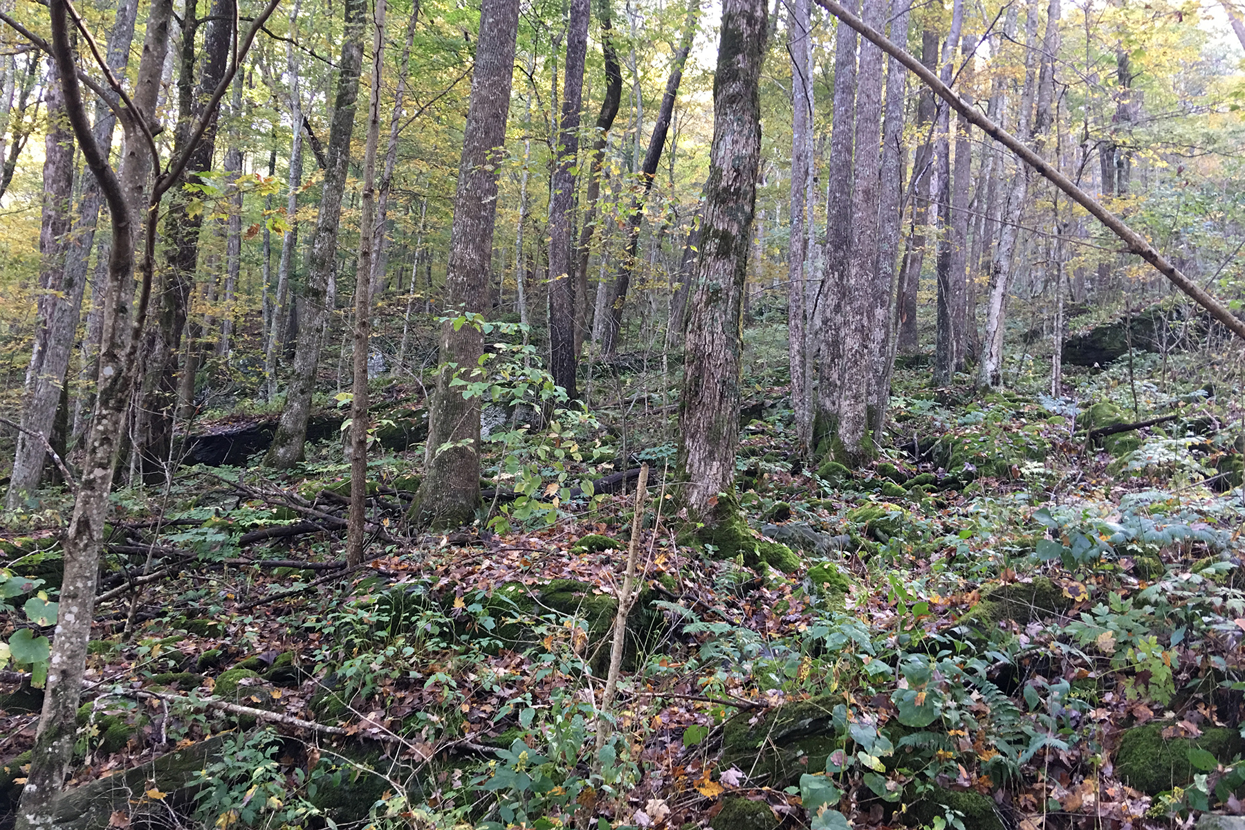 Additional photo for property listing at BOONE - YONAHLOSSEE RESORT TBD  Glenridding Rd,  Boone, North Carolina 28607 United States